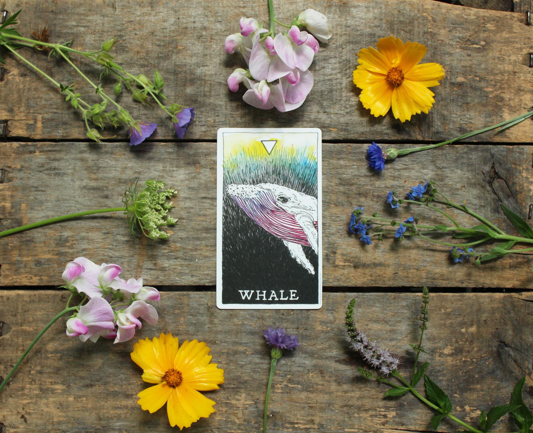 14-whale.jpg