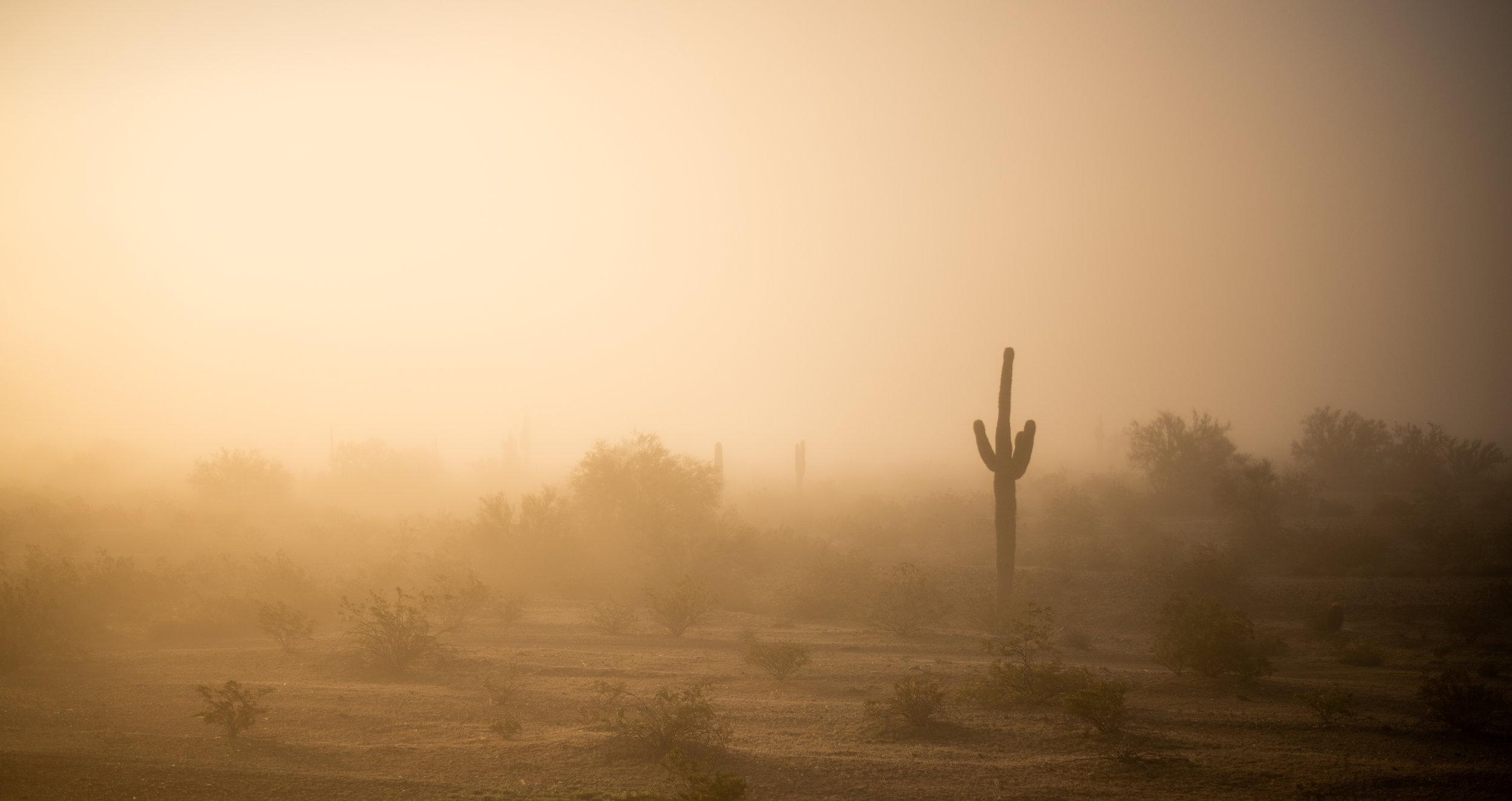 Cactus in the Mist