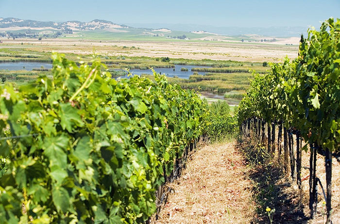 Napa_Valley_Measure_C-700x461.jpg