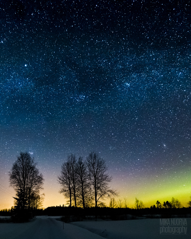 Trees under Milky way.jpg