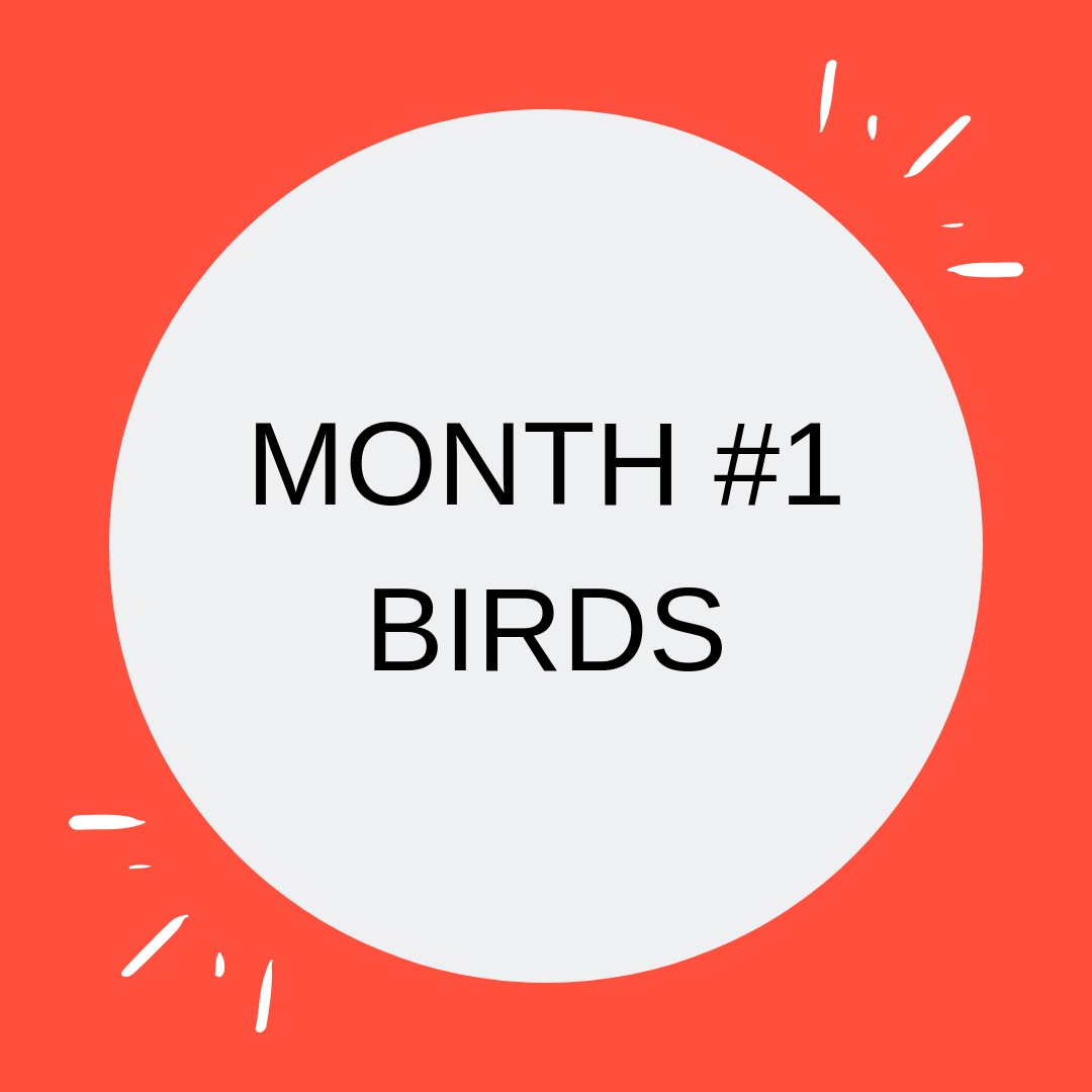 MONTH #1 BIRDS-2.png