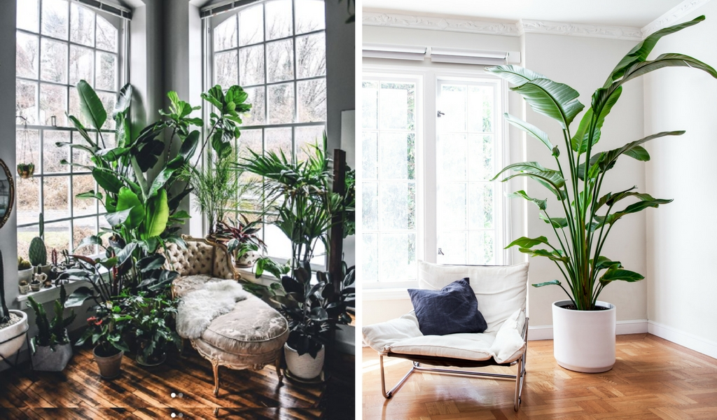 Right photo by  @hiltoncarter  left photo  Bird of Paradise  by  Léon & George
