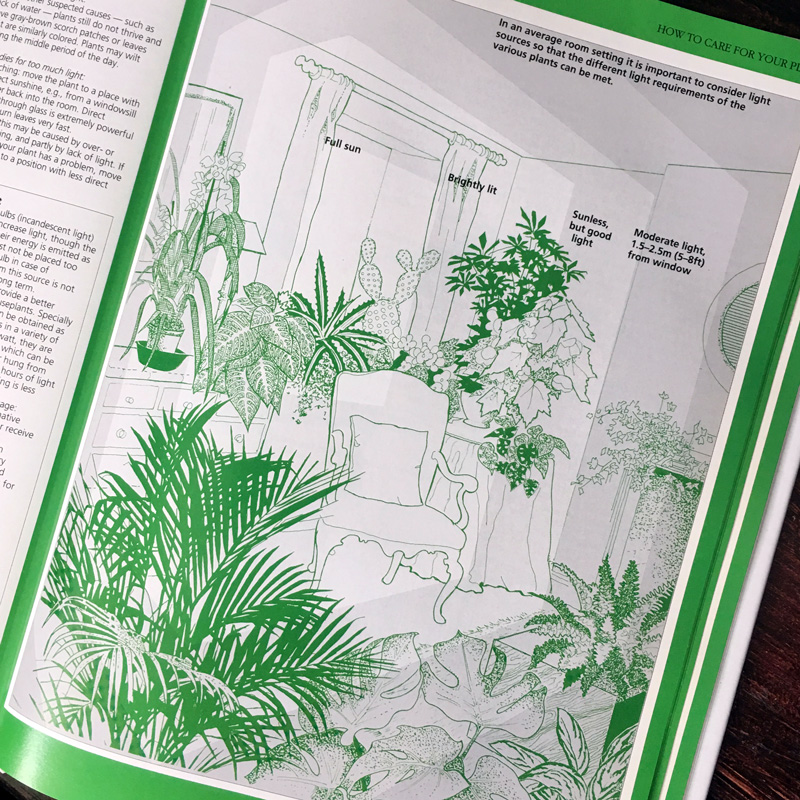 Illustration from  The Complete Book of Houseplants  by John Evans