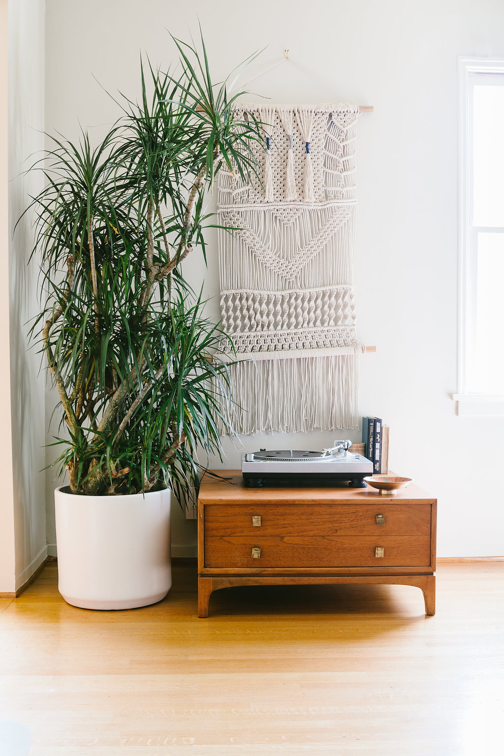 DRAGON TREE - A timeless indoor plant, recognizable for its long slender striped leaves that explode out of a strong trunk. Great for a modern or bohemian look, and one of the easiest plants to grow and care for.6ft tall plant with ceramic pot: $499Delivery included in SF & LA