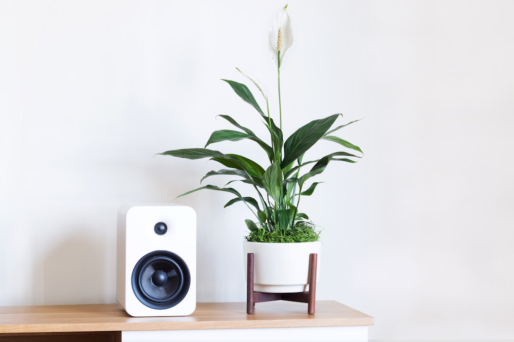 PEACE LILY - A popular choice for indoor plants because of its white flower-like features and ease of care. Its elegant green leaves are terrific at purifying the air from undesired toxins. The perfect gift for a budding plant parent.1 ½ft tall plant + ceramic pot + standDelivery in SF included