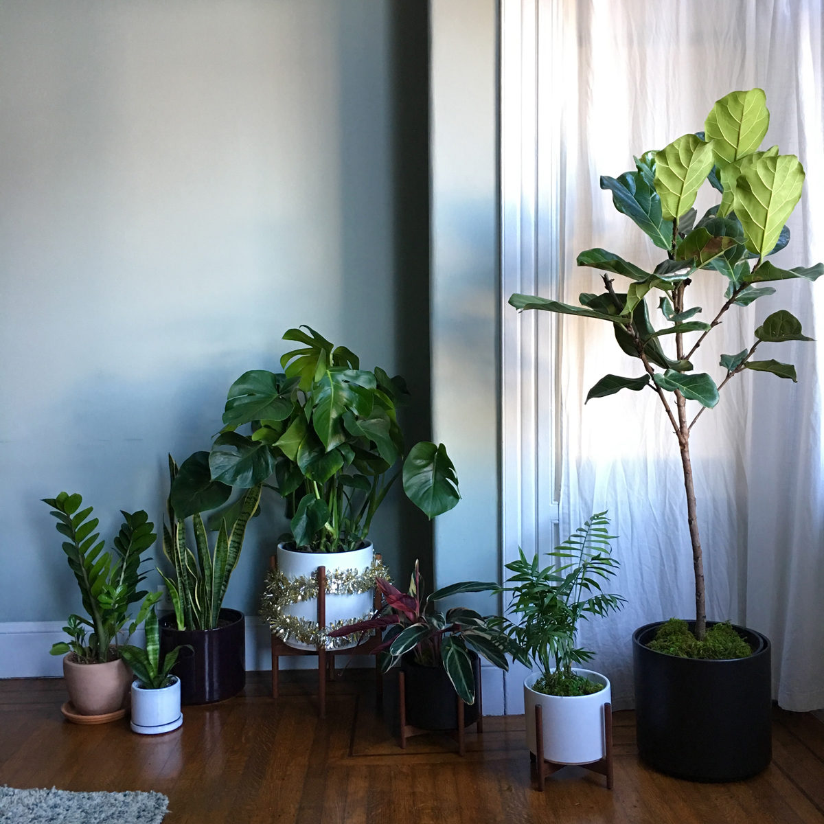 Houseplants placed from bright (R) to medium light (L).