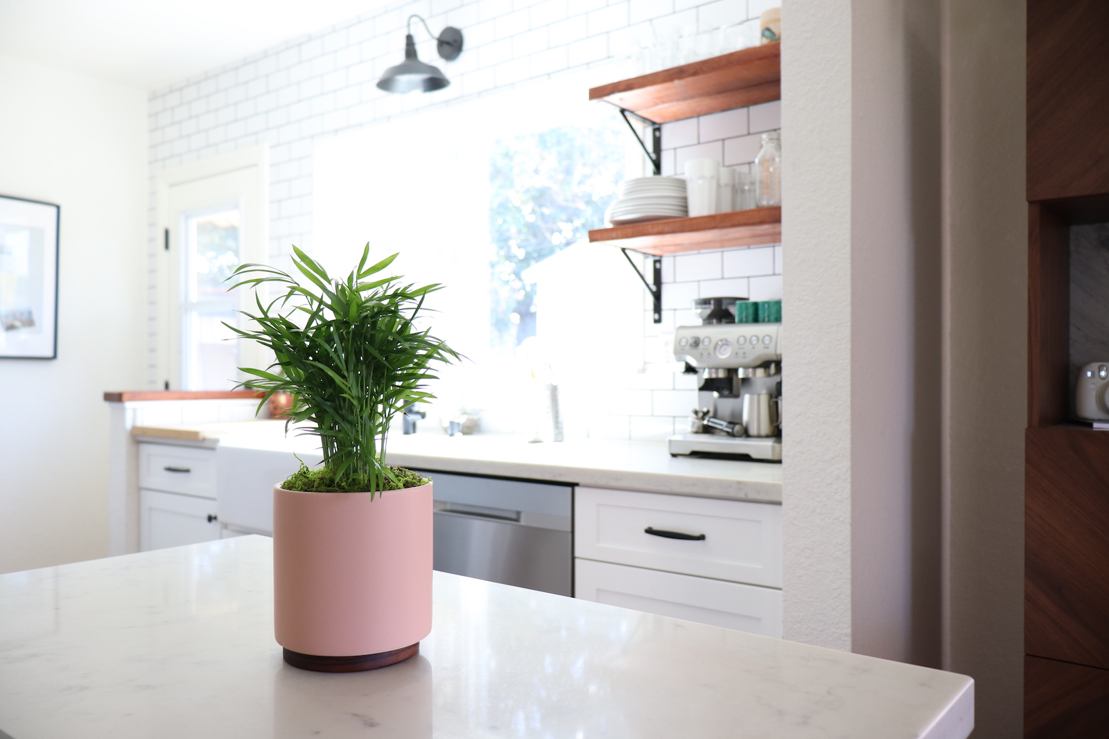 Parlor palms are perfect plants for the bathroom