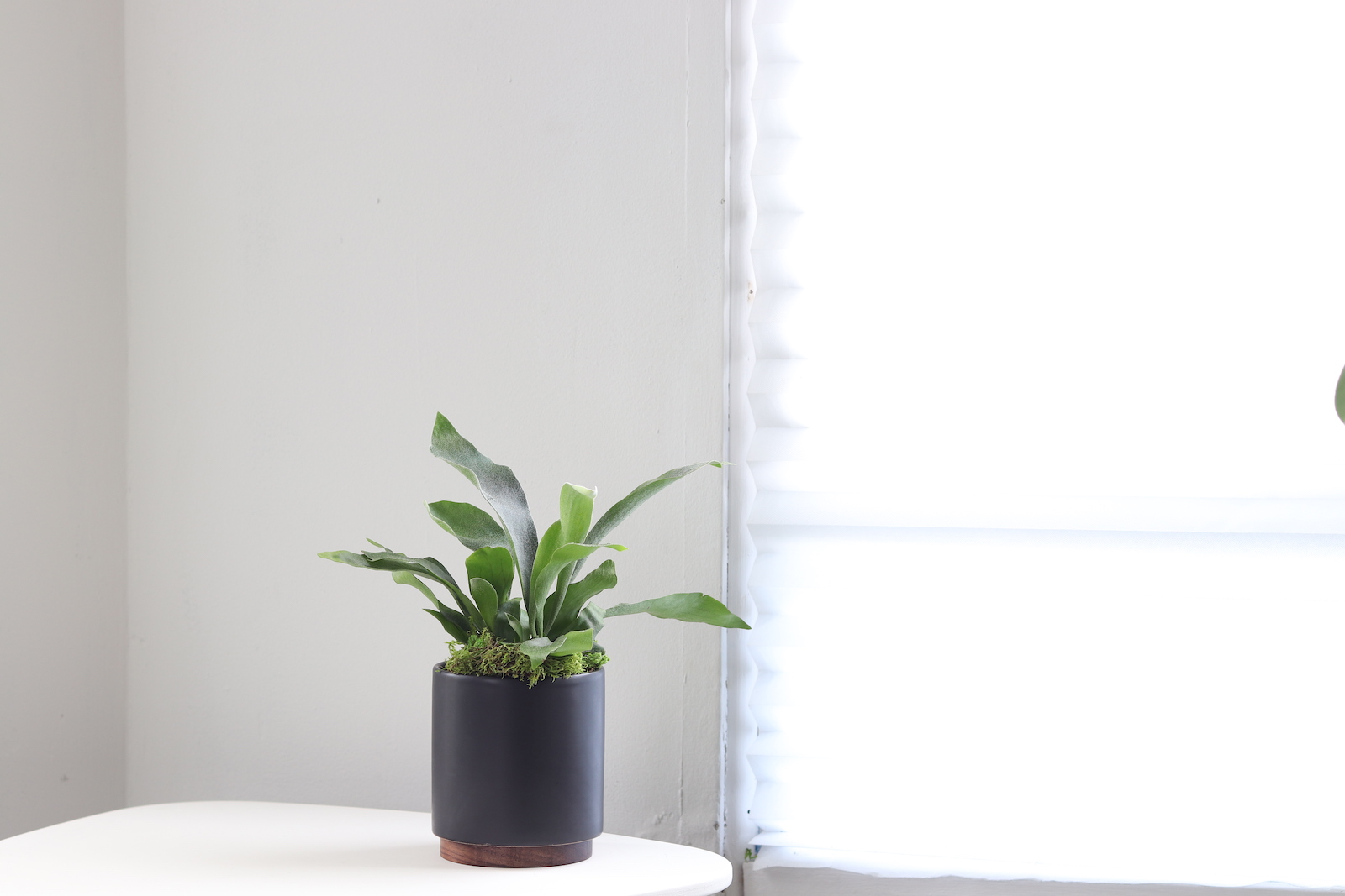Ferns are great plants for bathrooms as they do well in humid areas