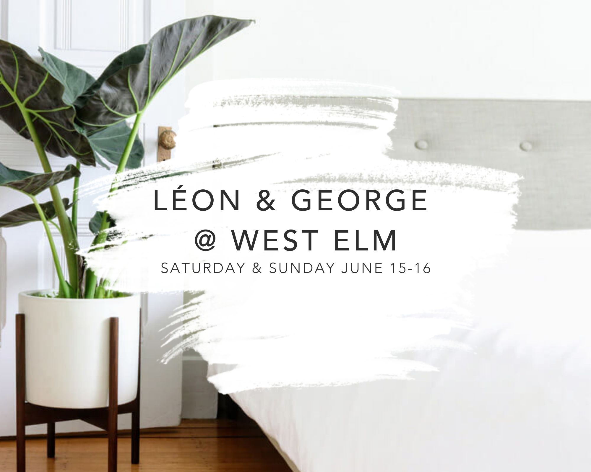 West Elm plants