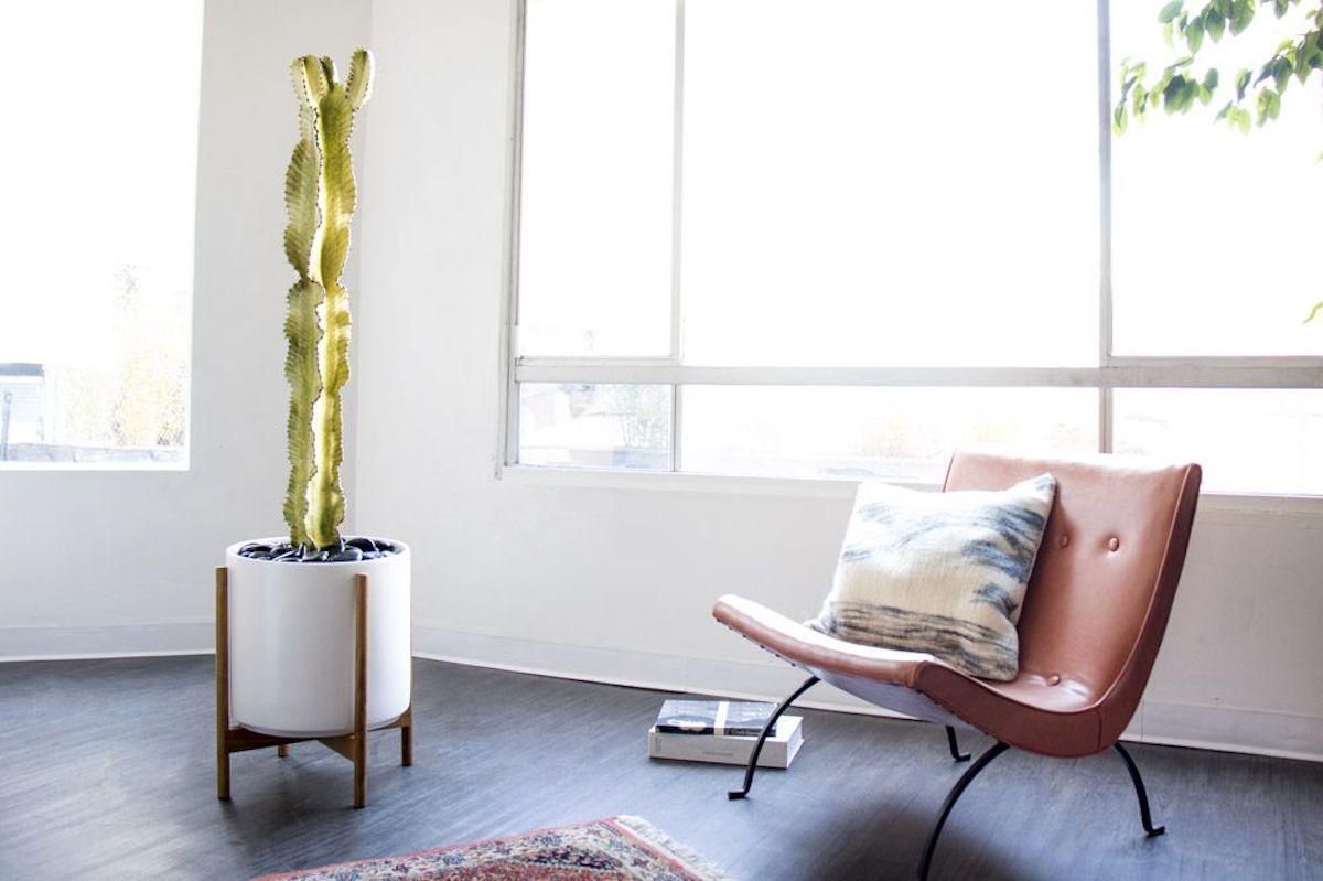 The Desert Cactus - AKA euphorbia ammak