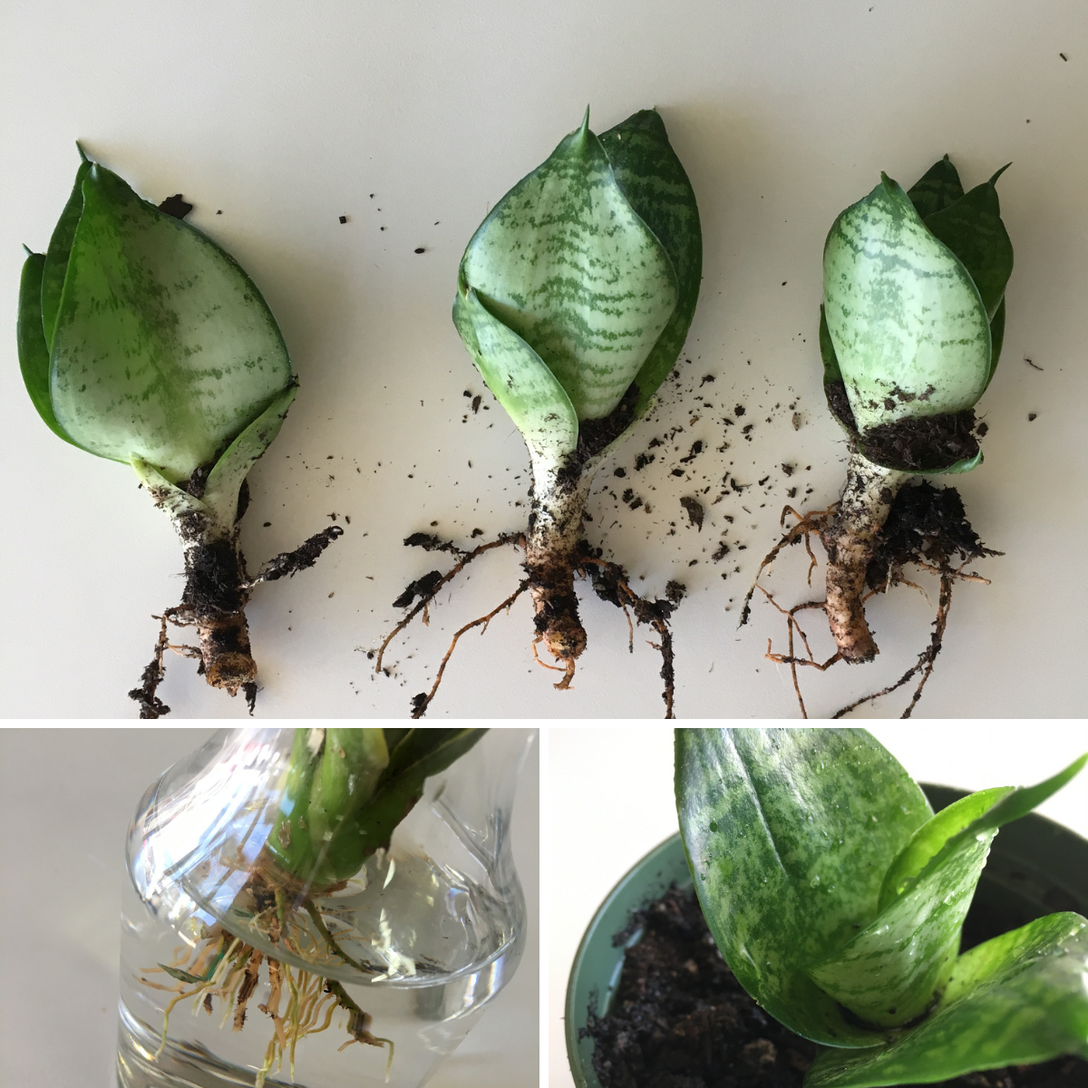 How to Propagate Your Plants: Three Easy Ways to Make Two ...