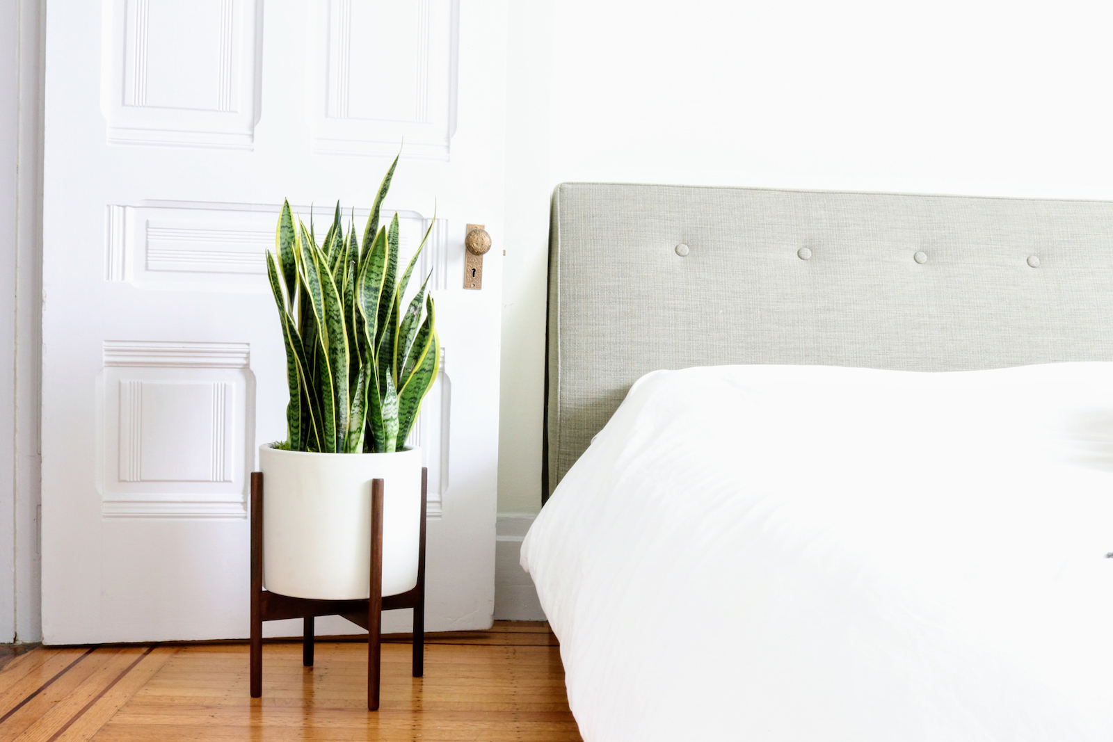 Thanks to its air-purifying qualities, the Snake Plant is the best plant for bedrooms.