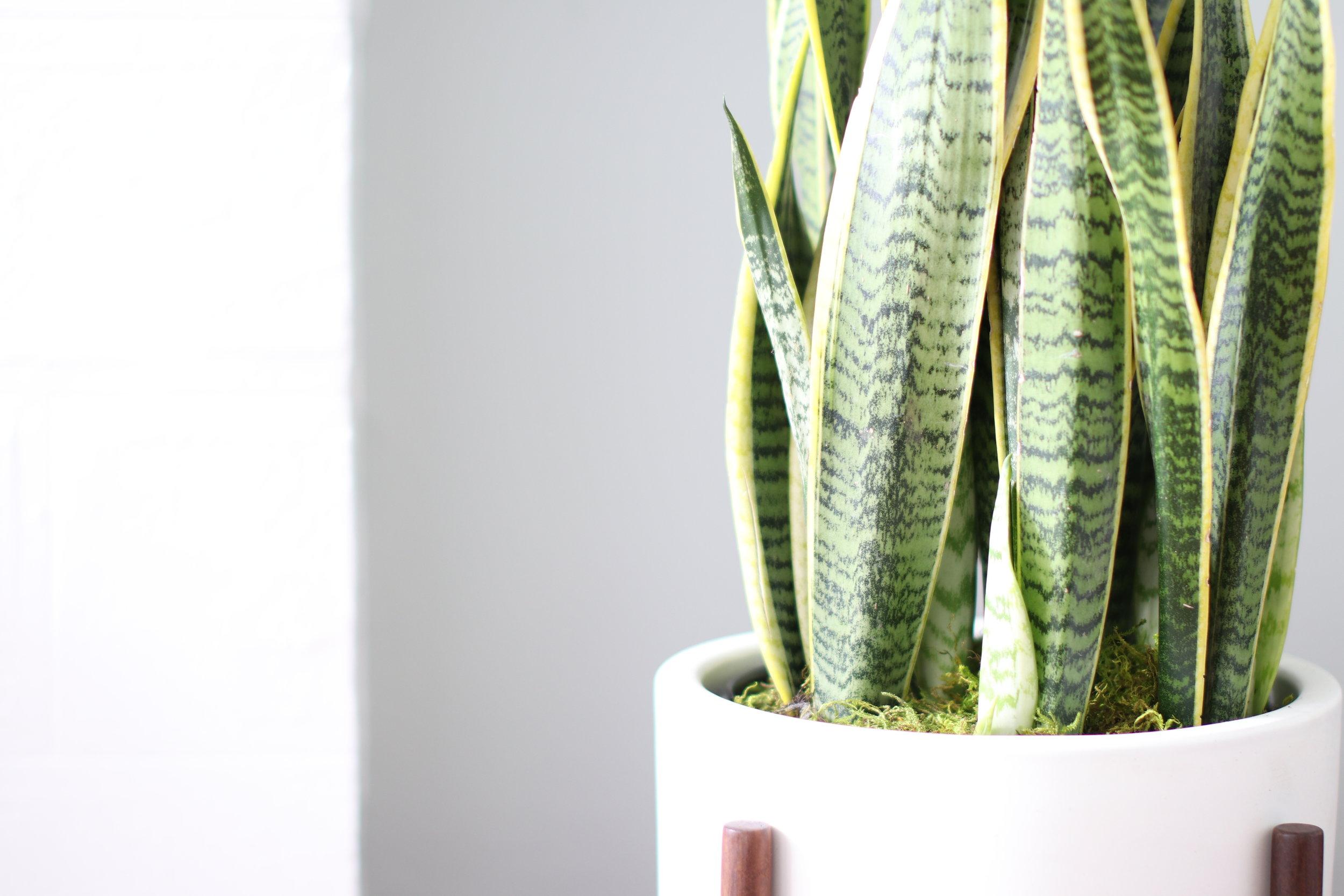 Indoor plants, potted & delivered. - Order online at leonandgeorge.com