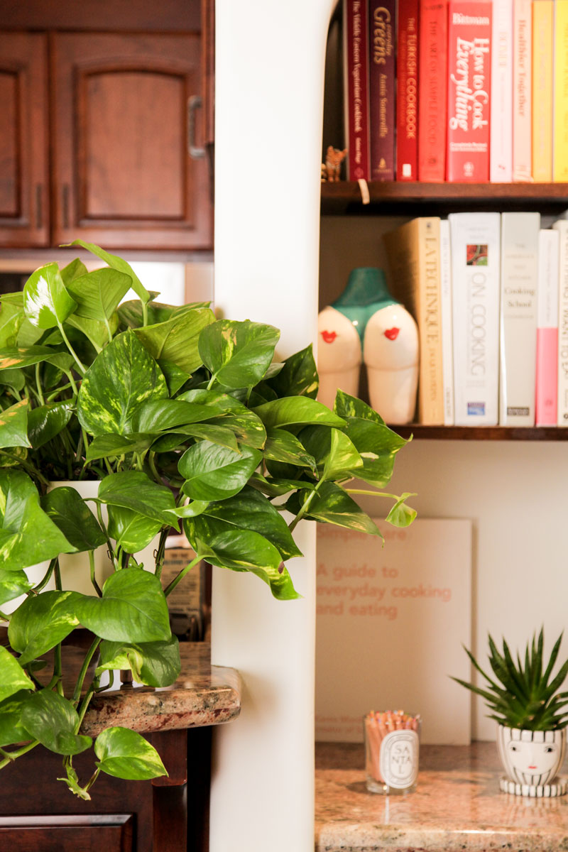 Natasha wanted a lush plant as an accent piece in her kitchen, she went with a  Cascading Pothos