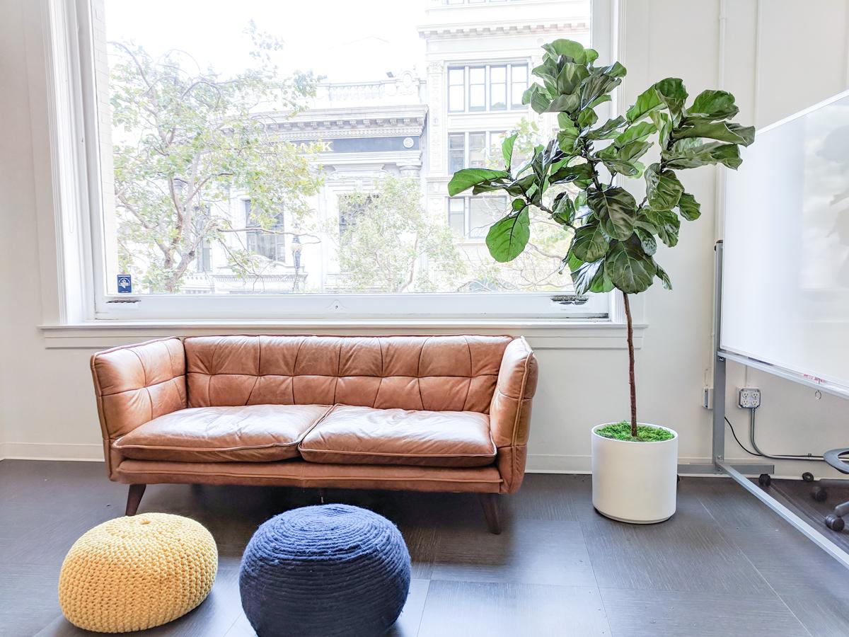 Benefits of indoor plants in the office