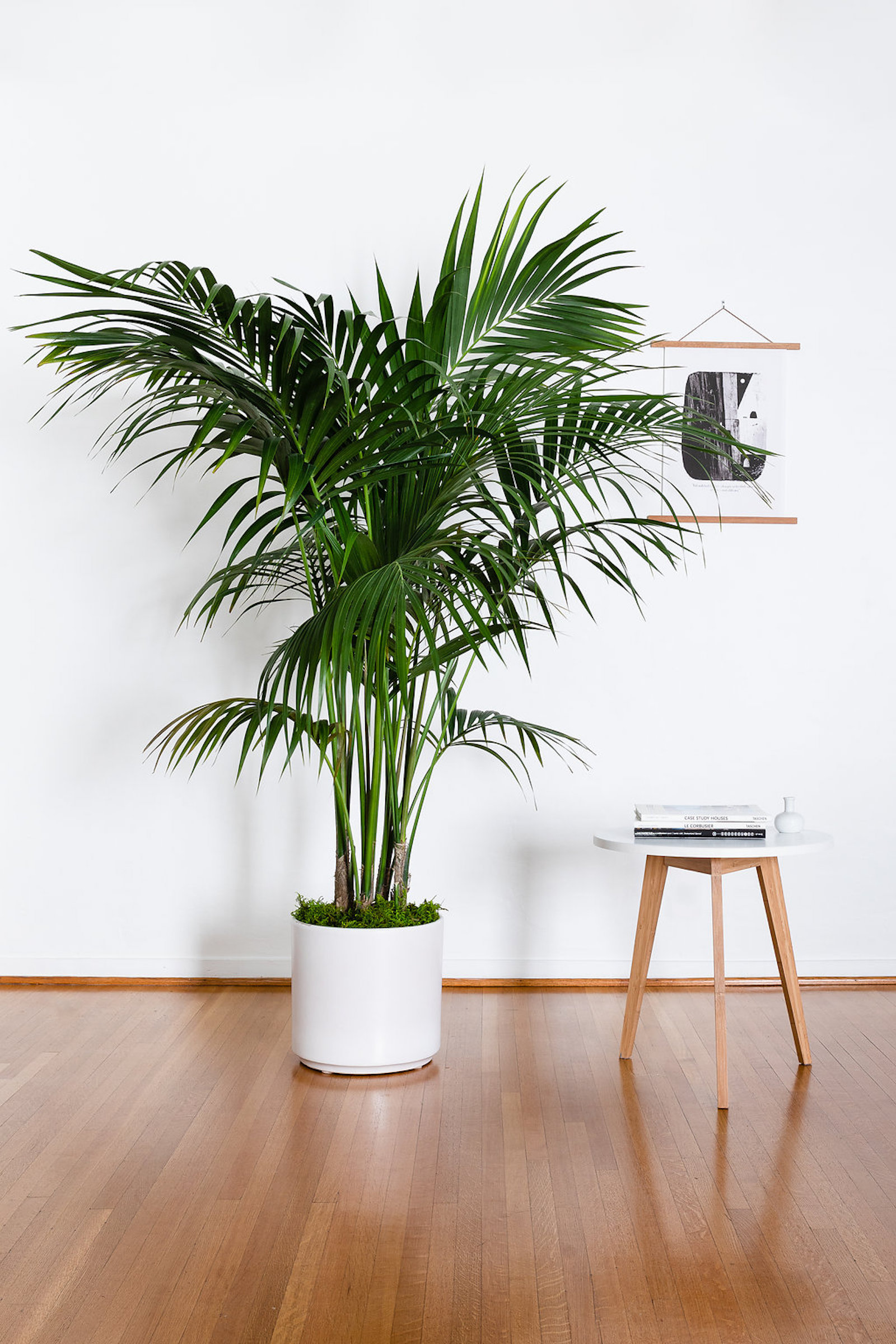 The best air-purifying plants for the workplace.