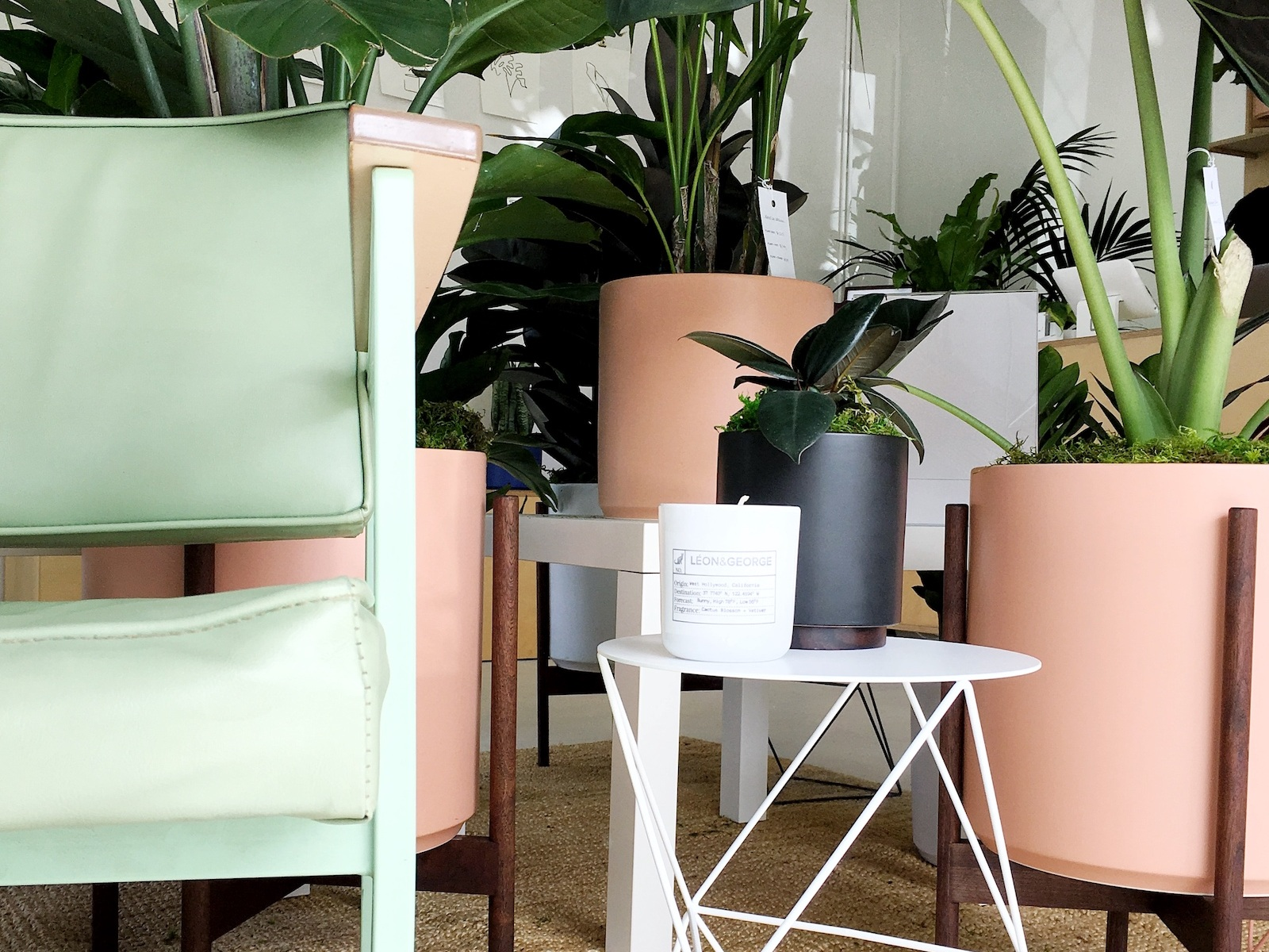 Personal Shopping Sessions - A new way to shop for plants, at our San Francisco showroom.