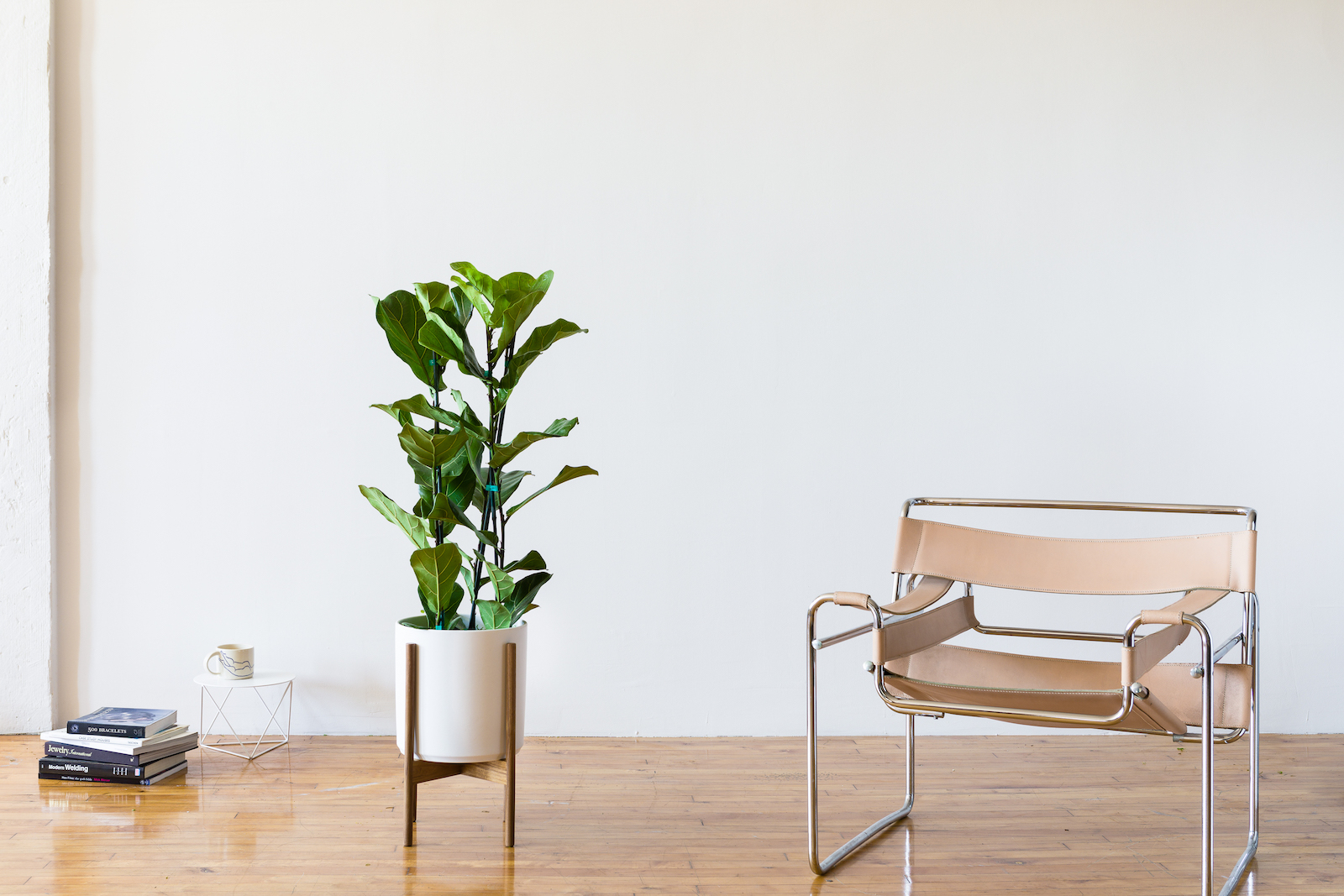 The Fiddle Leaf Fig is one of the most popular office plants for its sheer beauty.