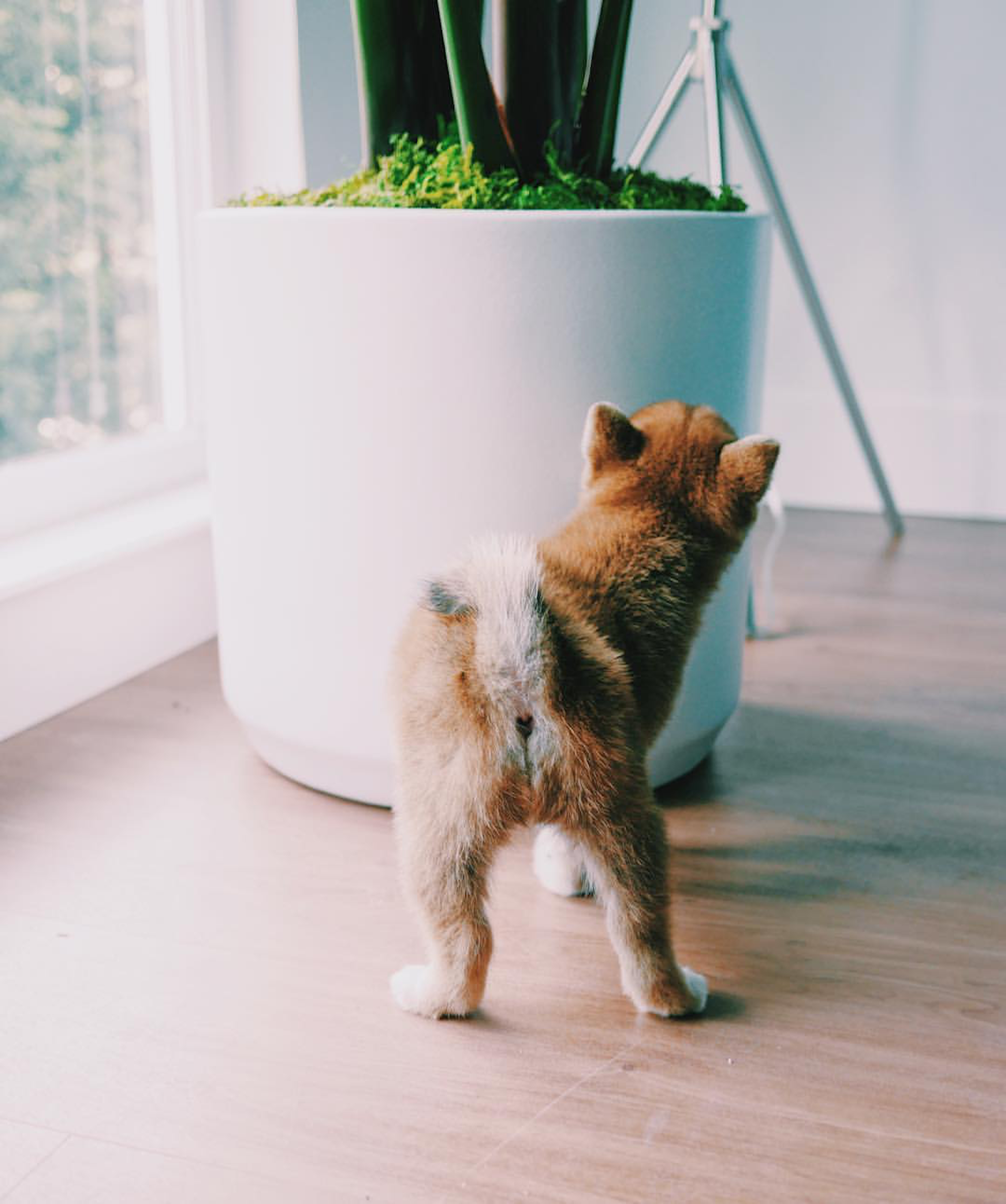 Our favorite pet-friendly plants, including air-purifiers and low-light options! Photo credit:  @mintlodica
