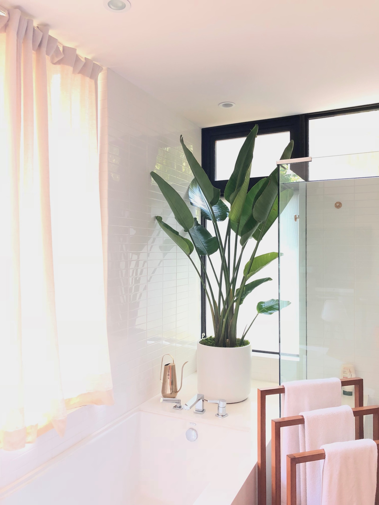 The best plants for the bathroom: the bird of a paradise is a moisture-loving plant that will love the humid environment of a bathroom