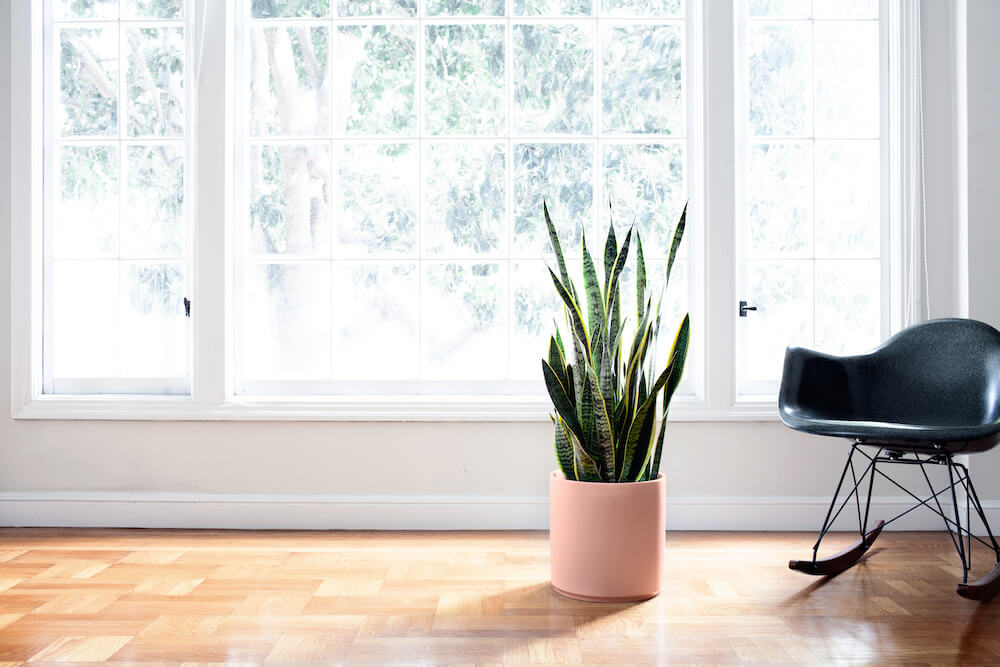 Snake Plant - An air-purifying plant that's as easy to care for as it is to love.