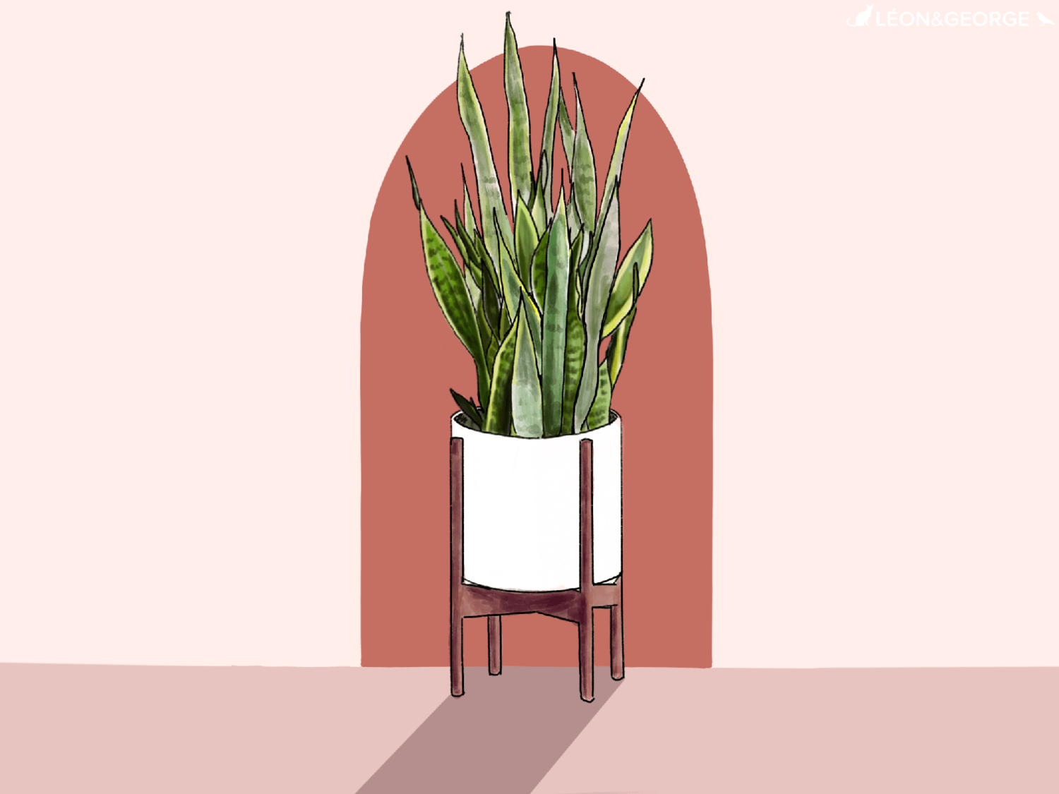 - snake plant care guide