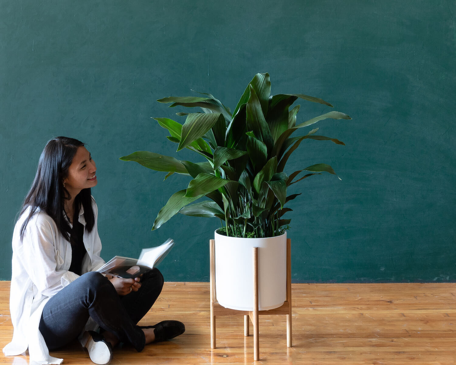How to choose the right plants for your space