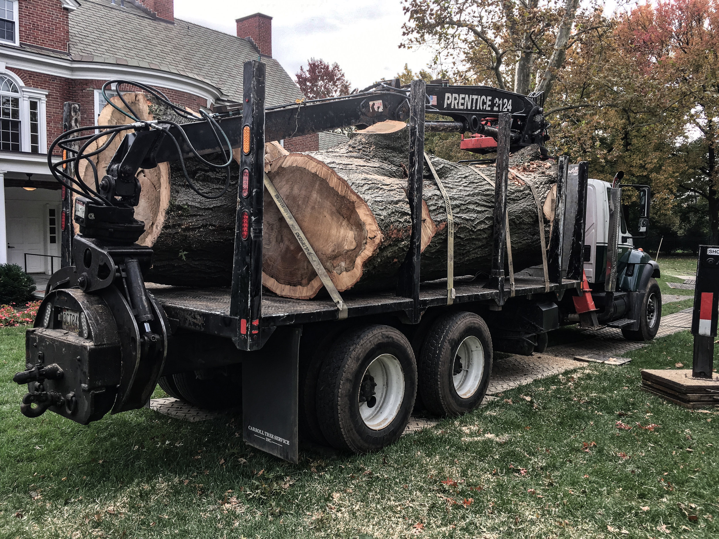 oak tree removal 2 (balt city)-1.jpg