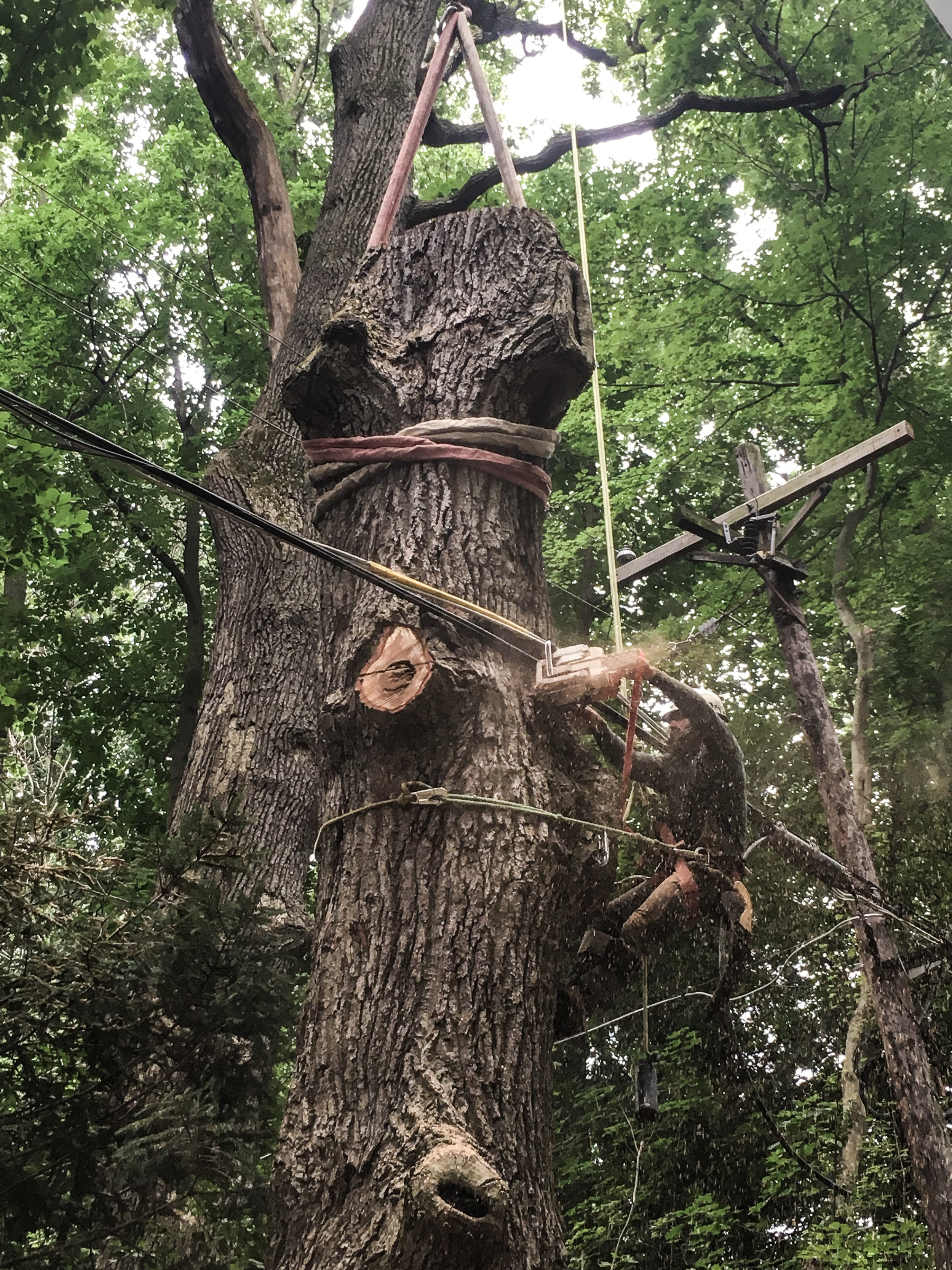 tree removal for bge 5 (Elkridge)-1.jpg