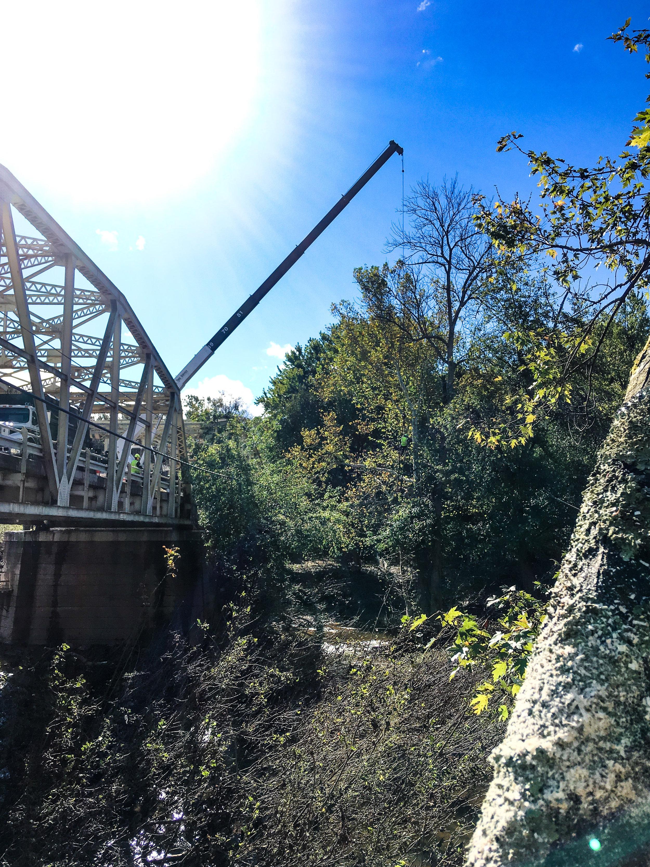 tree removal over bridge 2 (frederick)-1.jpg