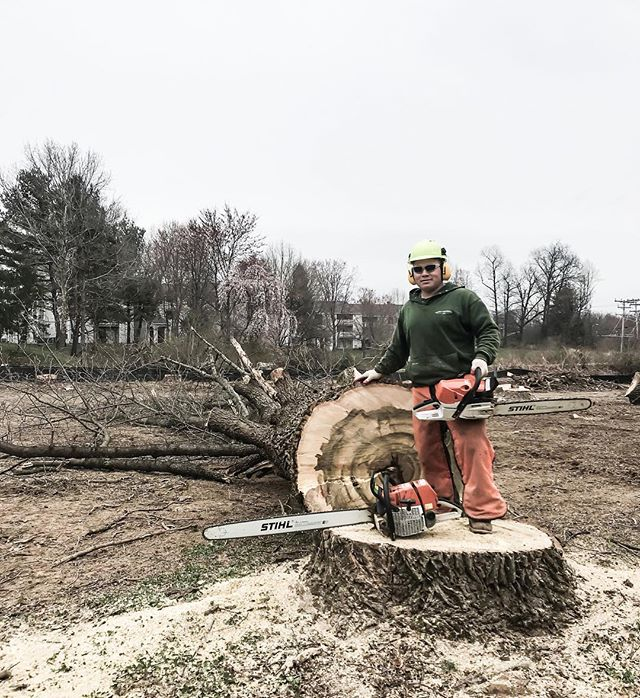 Mario cutting down an oak tree (Apr 2019) 📷: Kevin • • • • • #oak #oaktree #tree #trees #treeremoval #treecutting #treework #treeservice #treecare #treeexperts #treesafety #chainsaw #arborist #arboristsofinstagram #owingsmills #baltimore #maryland #carrolltreeservice