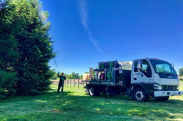 Chris spraying fungicide treatment on Douglas Firs (June 2019) 📷: Nick • • • • • #tree #trees #treehealthcare #treehealth #planthealthcare #douglasfir #douglasfirs #evergreen #evergreentrees #pinefamily #pine #pseudotsugamenziesii #oregonpine #columbianpine #evergreenconifer #fungicide #nature #arborists #arborist #arboristsofinstagram #harfordcounty #darlington #maryland #carrolltreeservice
