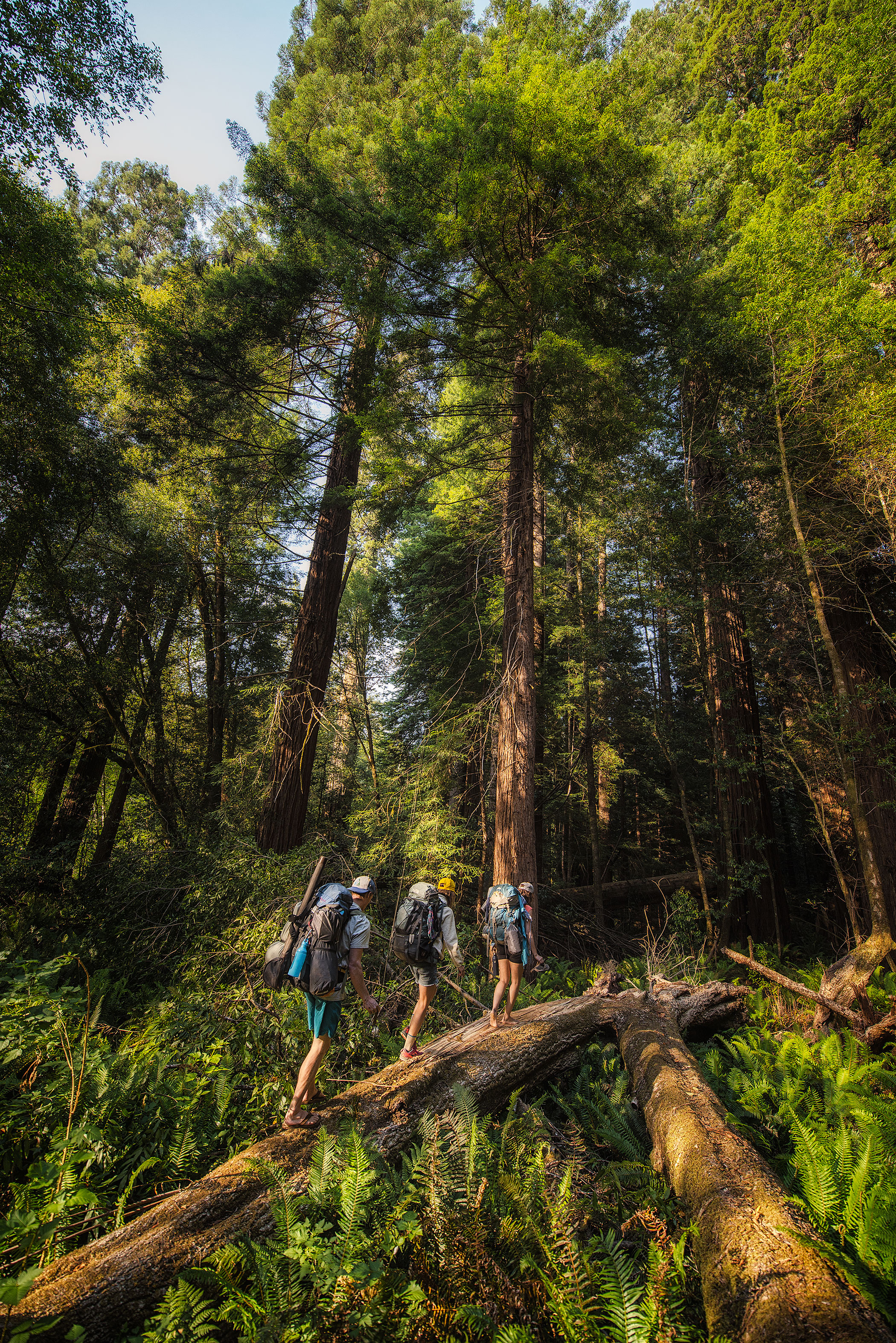 austin-trigg-redwood-water-bottle-hiking-tall-tree-grove-forest-camping-backpacking-california.jpg