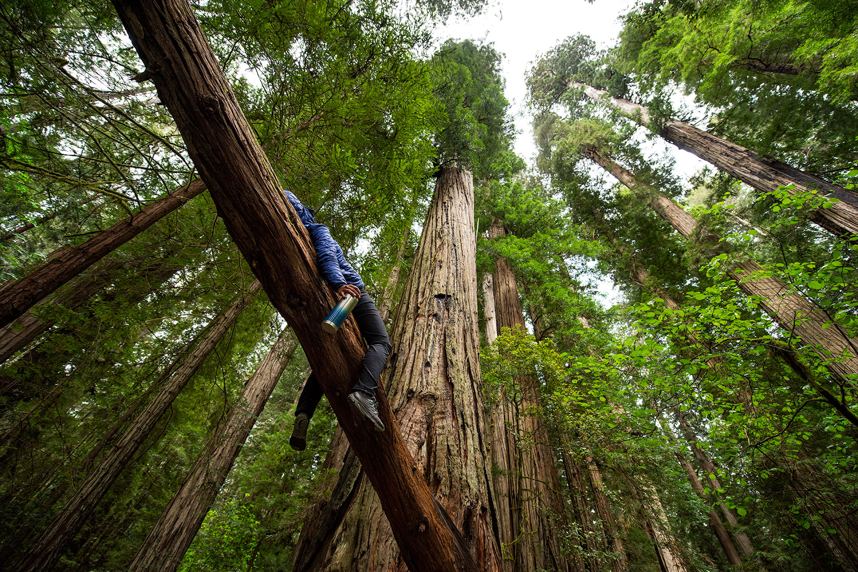 austin-trigg-redwood-water-bottle-Stout-grove-hanging-coffee-product-tall-tree-forest-northern-california.jpg