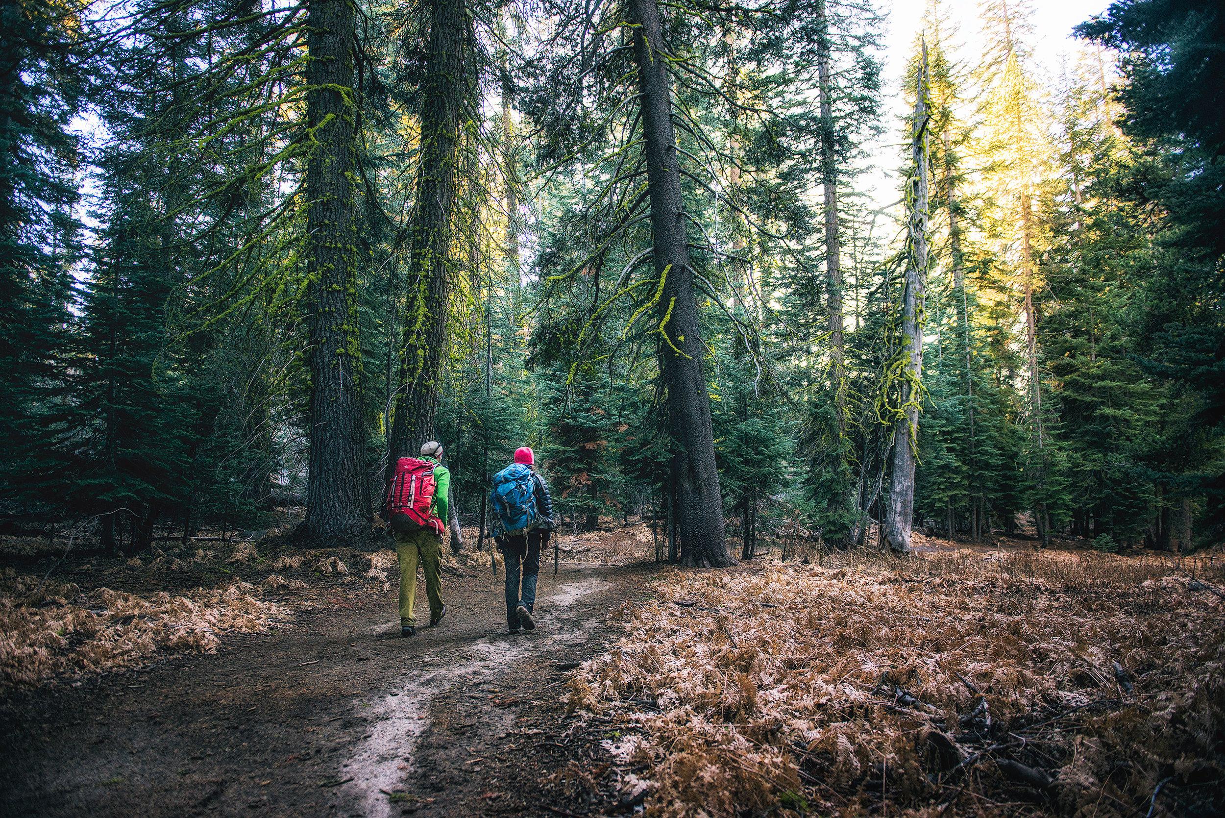 austin-trigg-wing-suit-base-jump-fly-yosemite-lifestyle-california-adventure-thrill-seeking-forest-hike.jpg