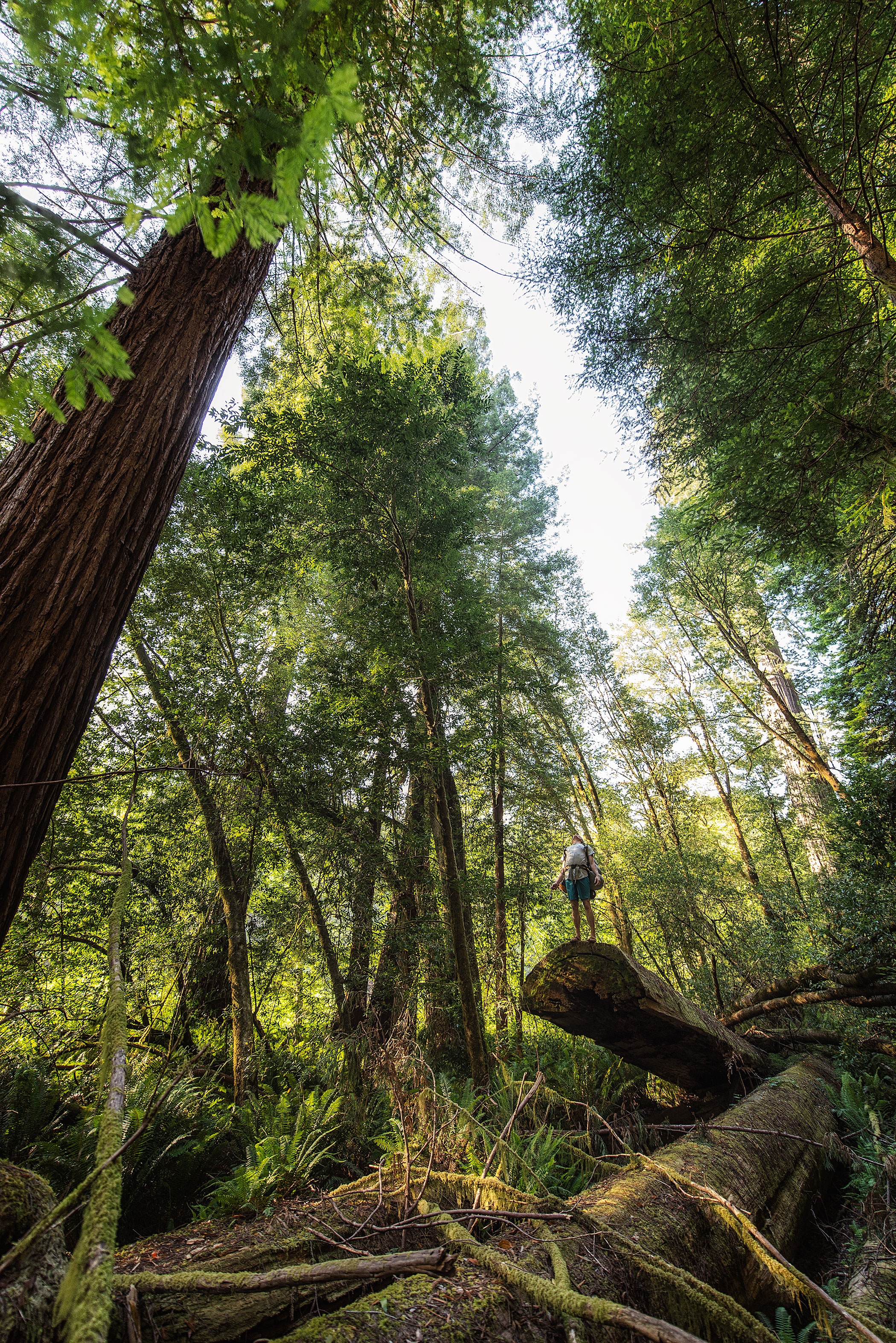 austin-trigg-redwood-water-bottle-california-tall-trees-grove-hiking-camping-adventure.jpg