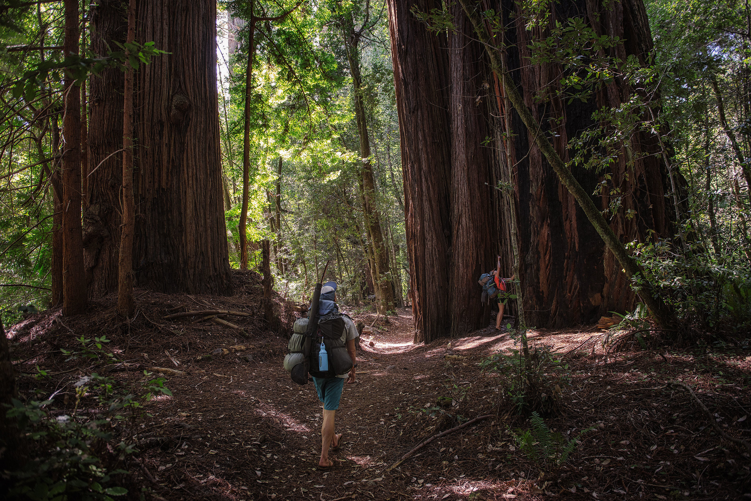 austin-trigg-redwood-water-bottle-tall-trees-grove-backpacking-hiking-big-forest-adventure.jpg