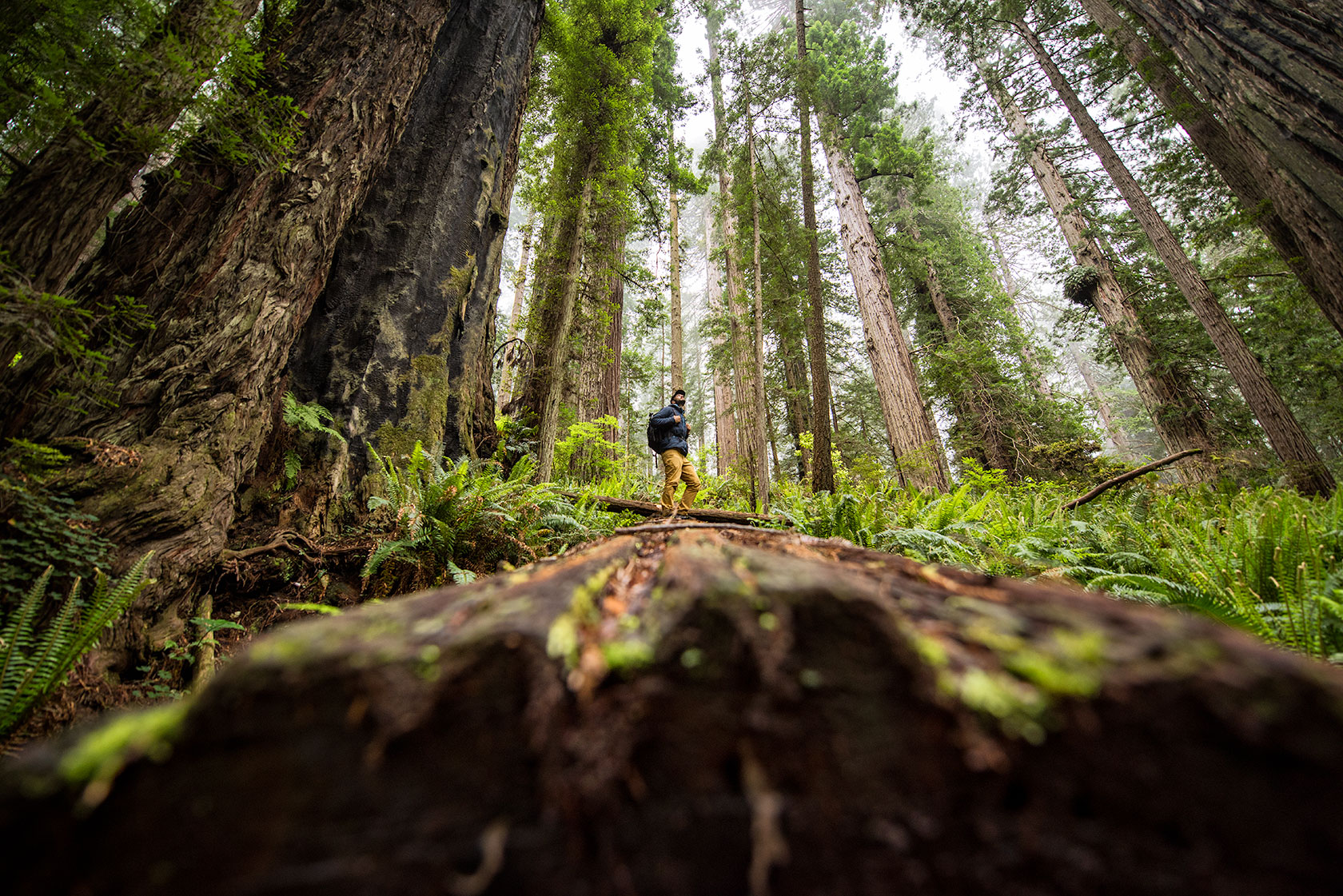 austin-trigg-redwood-national-state-park-fog-Log-Standing-explore-forest-tall-tree.jpg