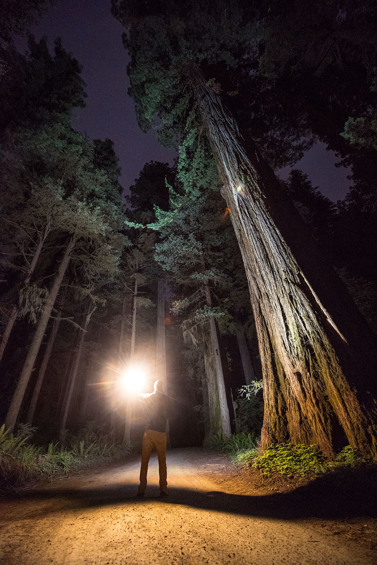 austin-trigg-redwood-national-state-park-Hunting-Sasquatch-night-forest-tall-trees.jpg