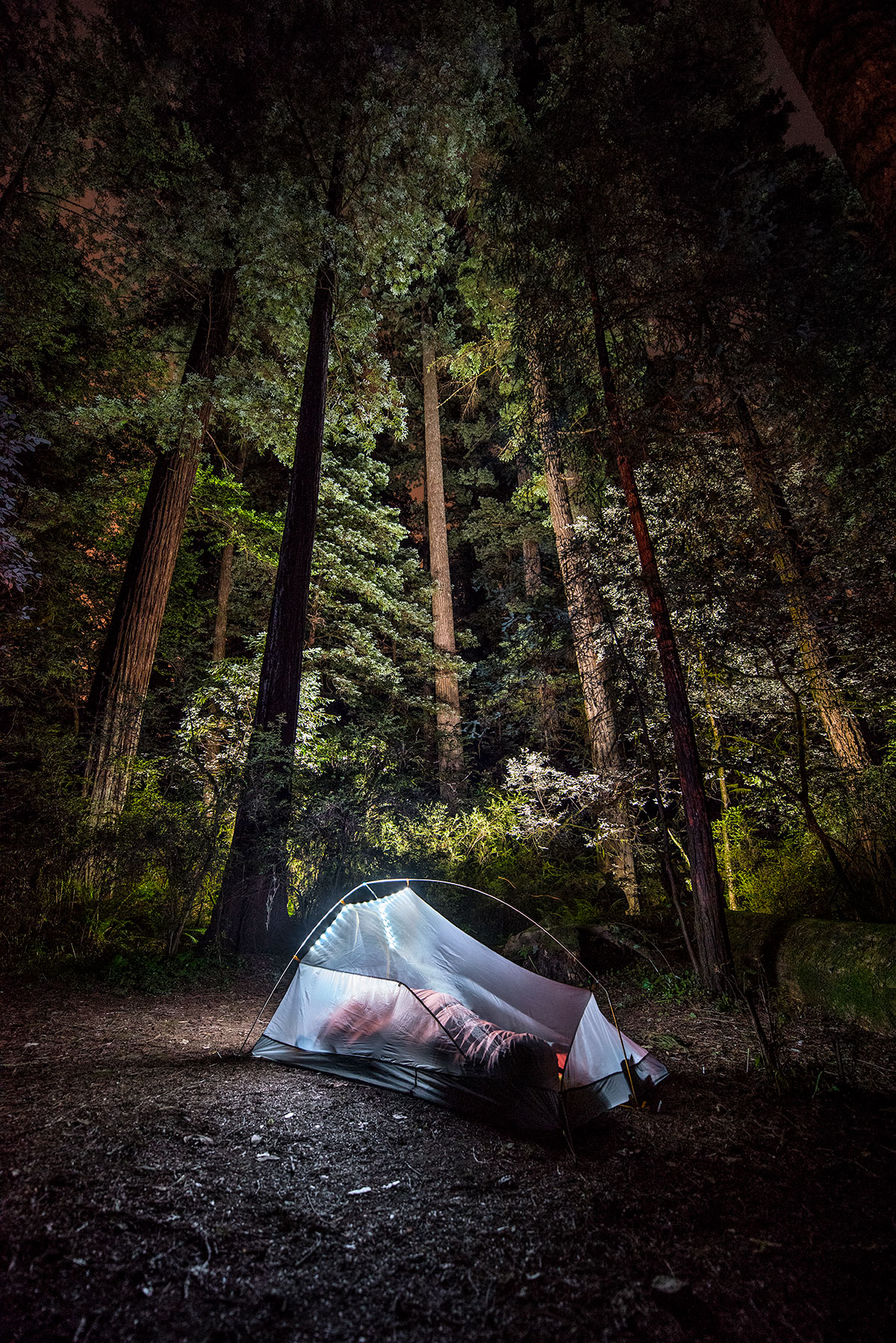 austin-trigg-redwood-national-state-park-tent-camping-night-forest.jpg