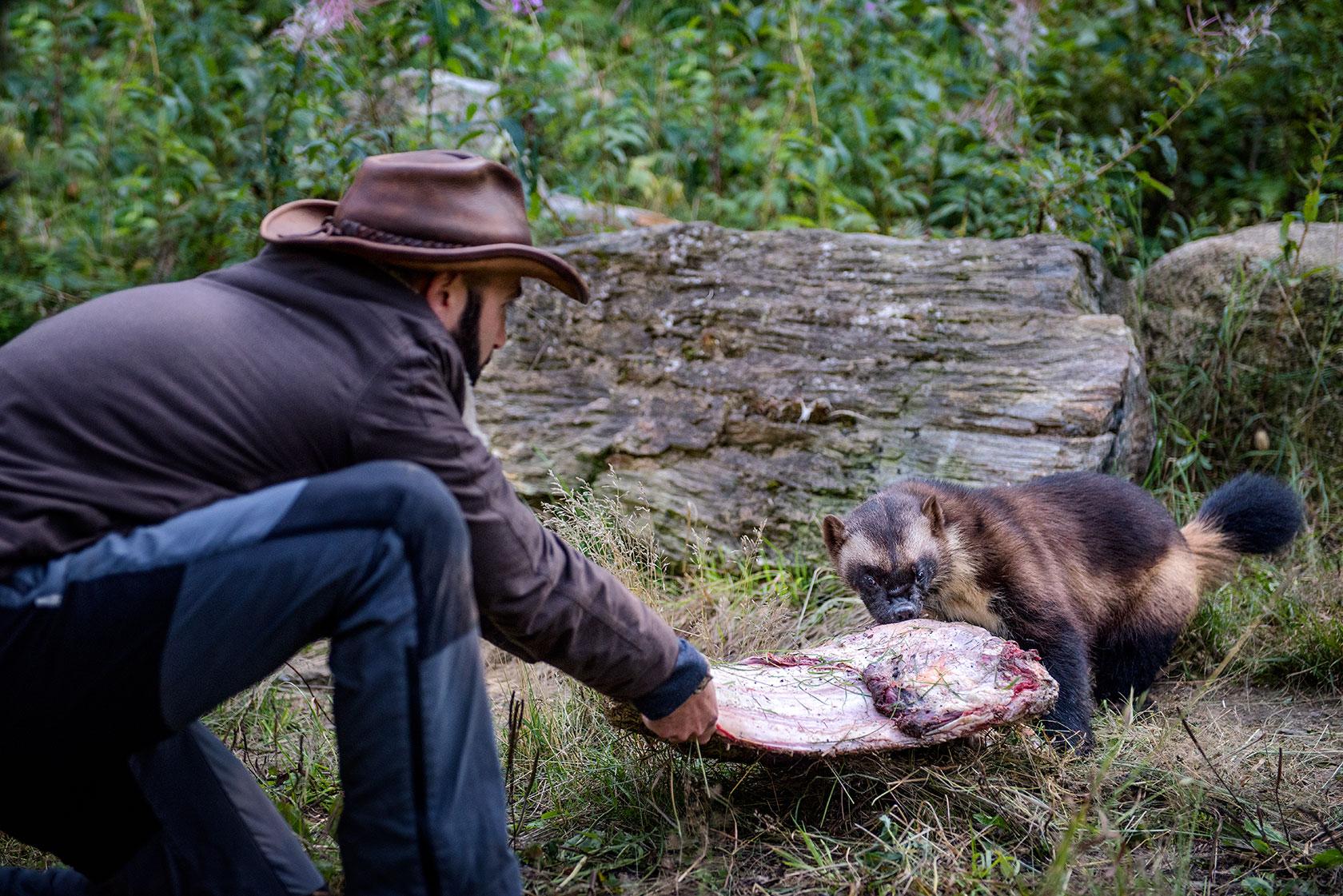 austin-trigg-brave-wilderness-alaska-BW-Coyote-Plays-TugOWar-DSC_5164-web.jpg