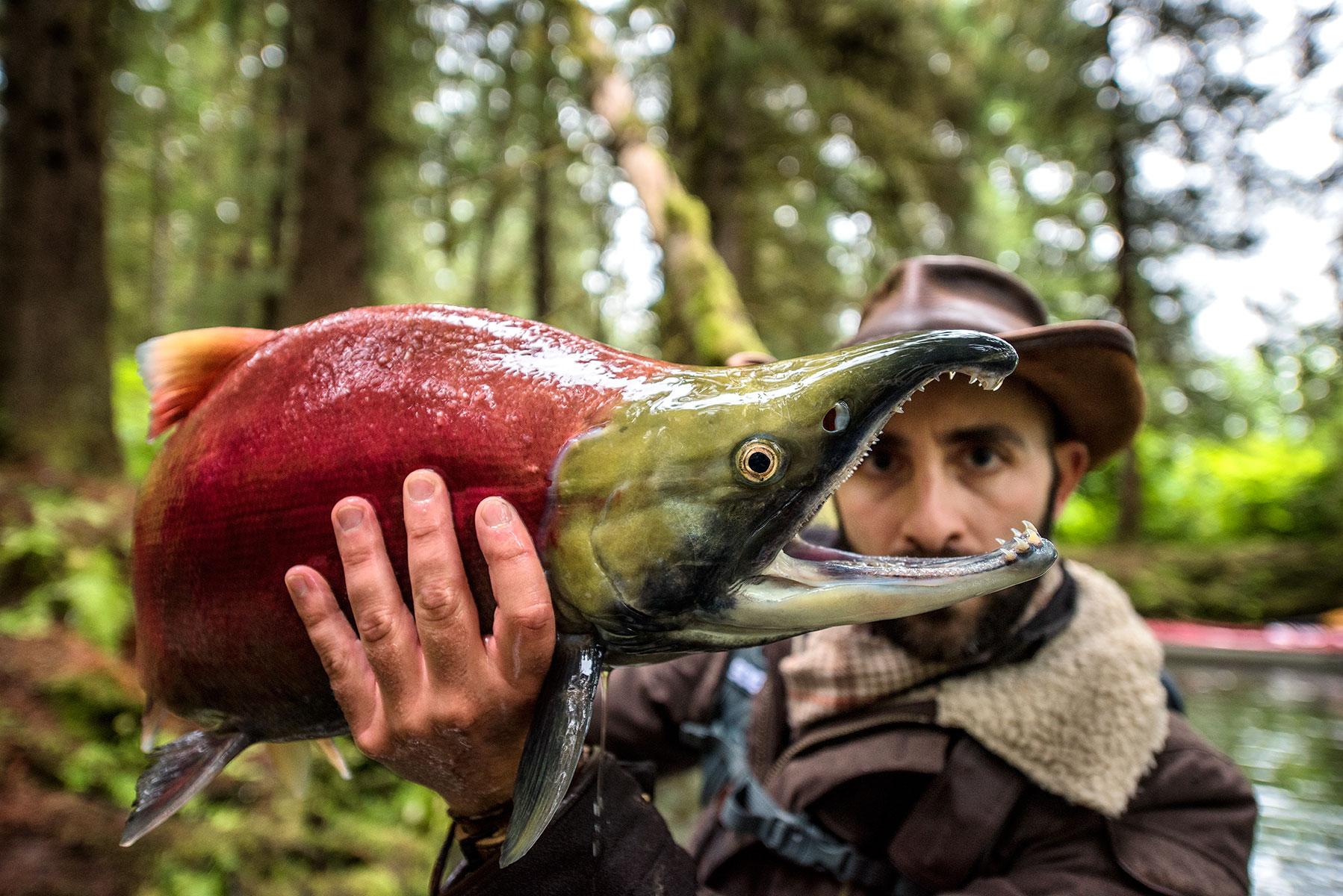 austin-trigg-brave-wilderness-alaska-BW-Coyote-Shows-Sockeye-Teeth.jpg