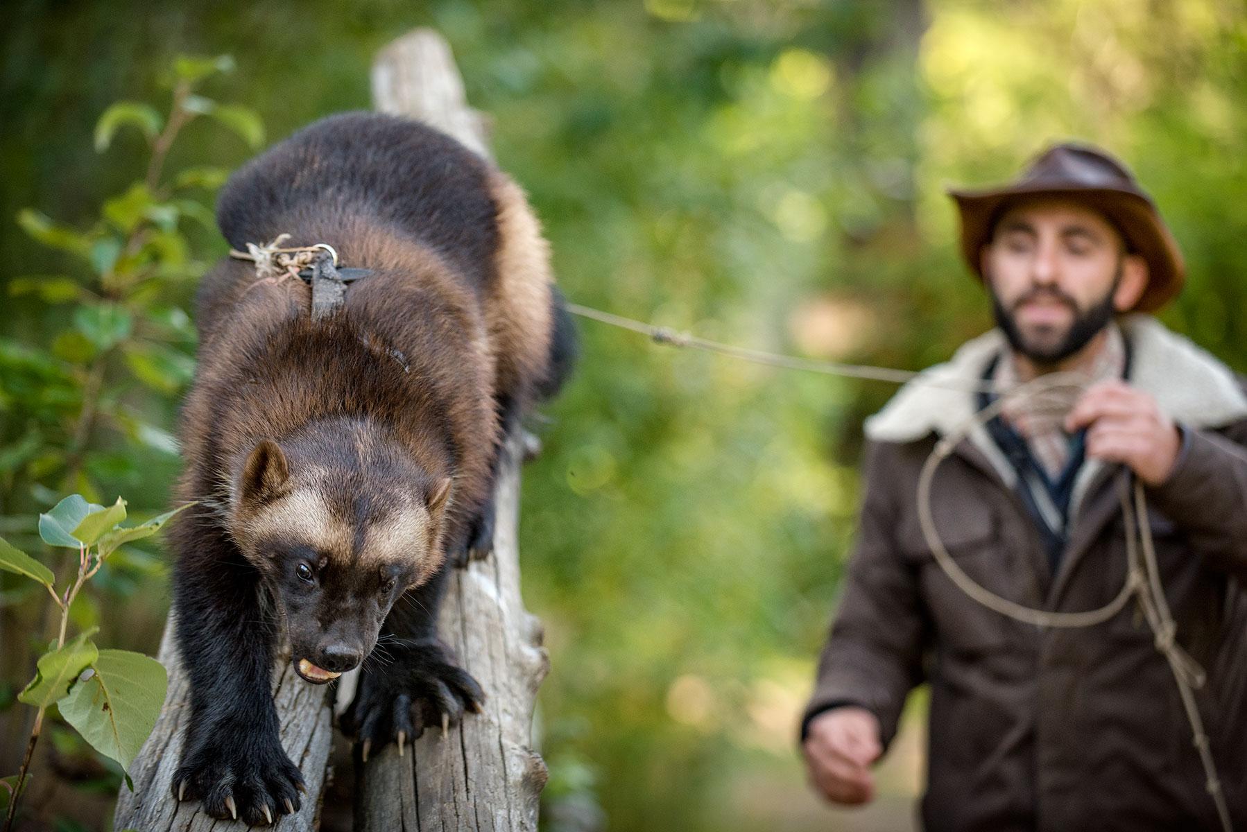 austin-trigg-brave-wilderness-alaska-BW-Coyote-Walks-Banff.jpg