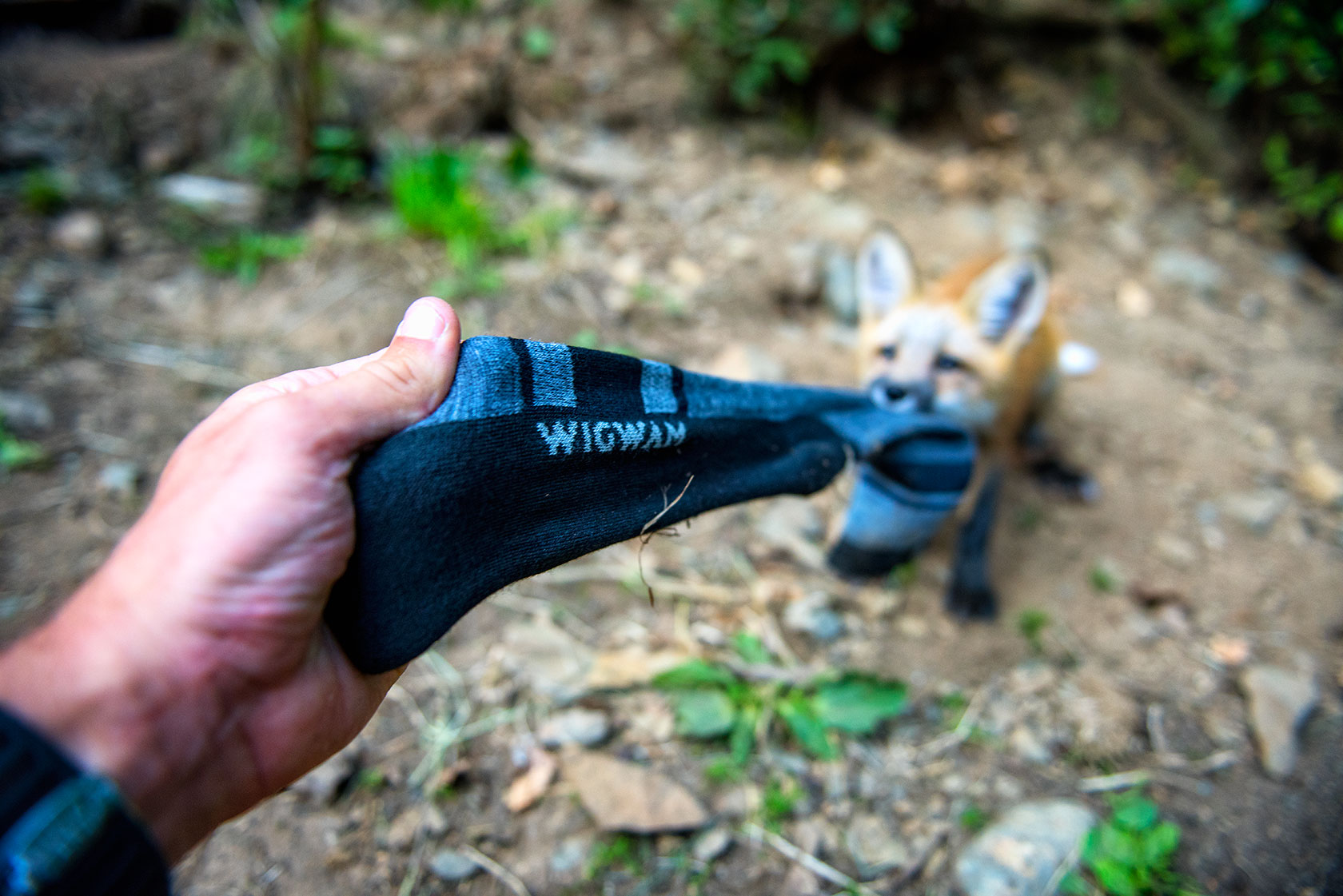 austin-trigg-brave-wilderness-alaska-BW-Wigwam-Fox-sock-pull.jpg