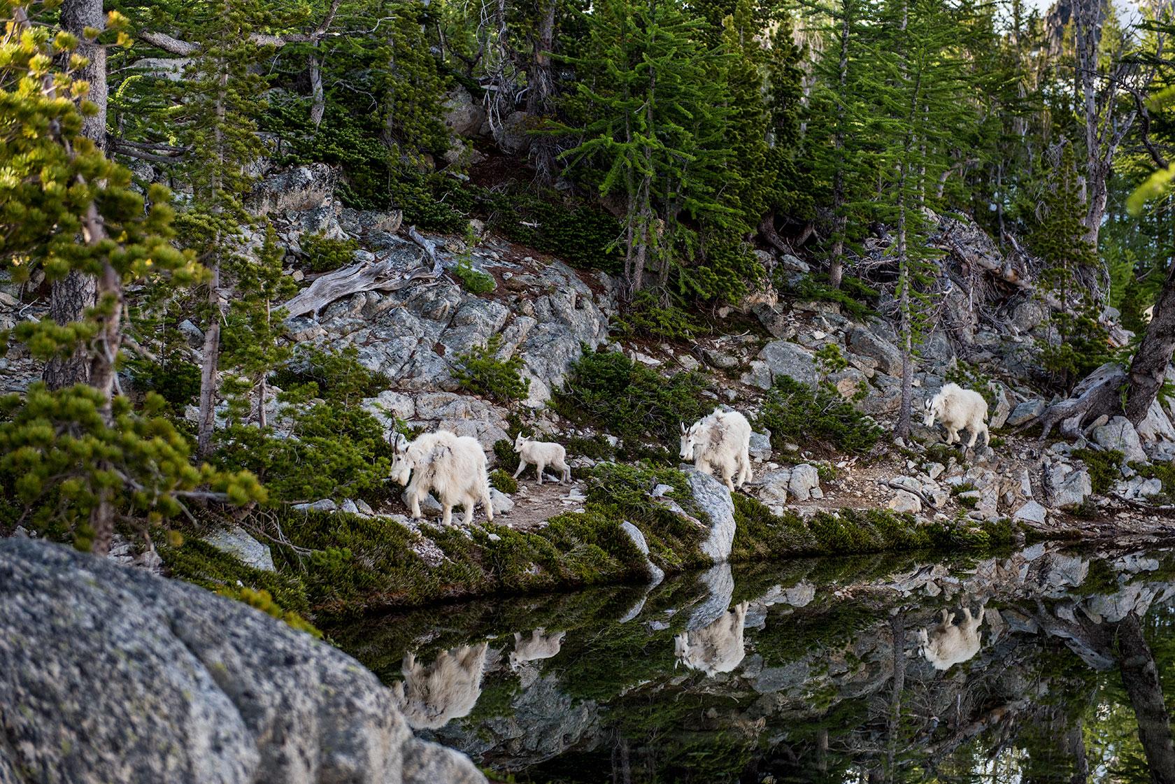 austin-trigg-osprey-hiking-backpacks-mountain-goat-washington-adventure-morning-outdoor-enchantments-.jpg