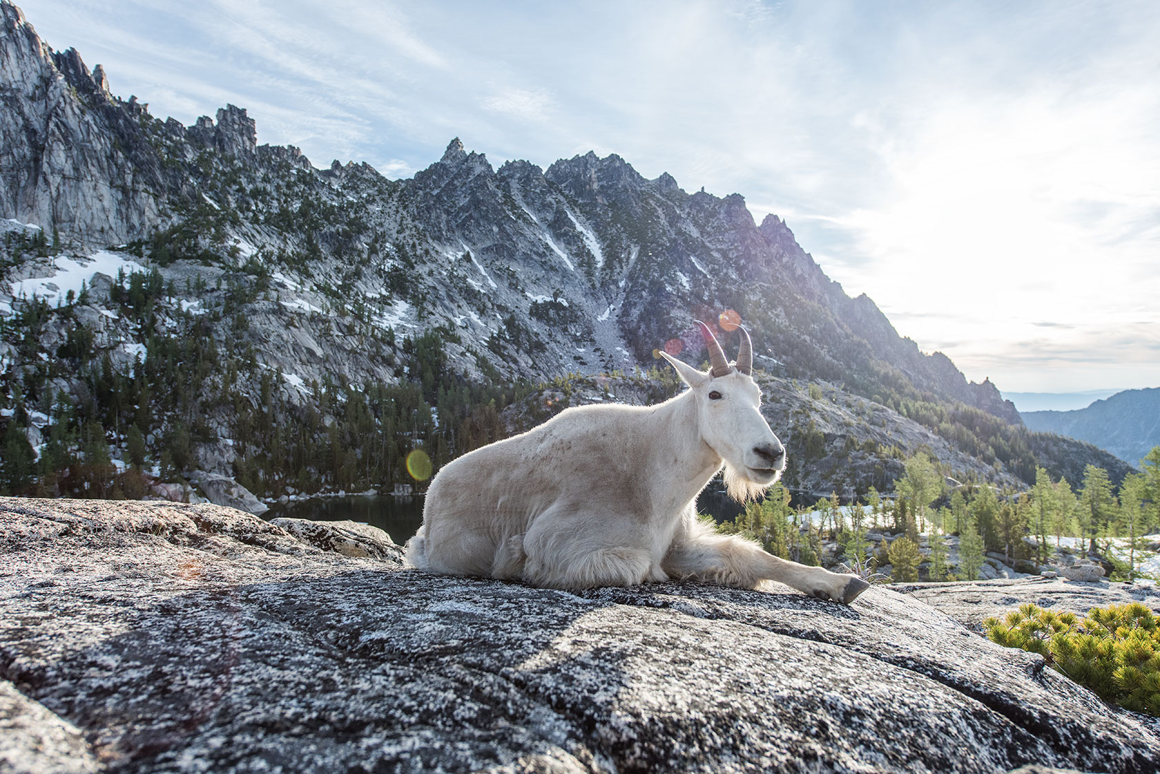 austin-trigg-osprey-hiking-backpacks-washington-lifestyle-morning-adventure-outdoor-active-hike-camp-sunrise-enchantments-mountain-goat.jpg