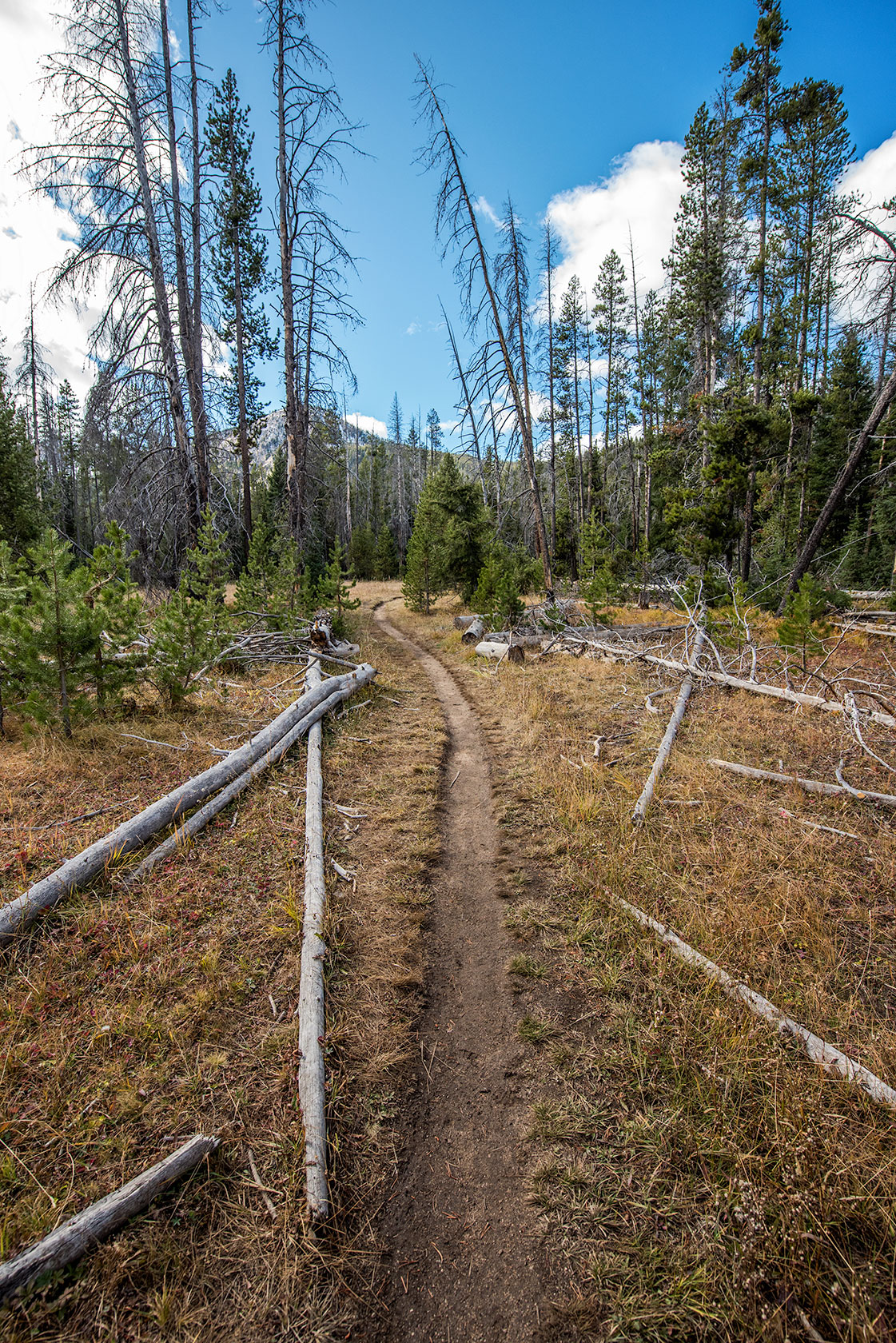 austin-trigg-patagonia-sawtooth-hiking-advenure-wilderness-forest-idaho-outside-lifestyle-day-fall-weather-mountains-trail.jpg