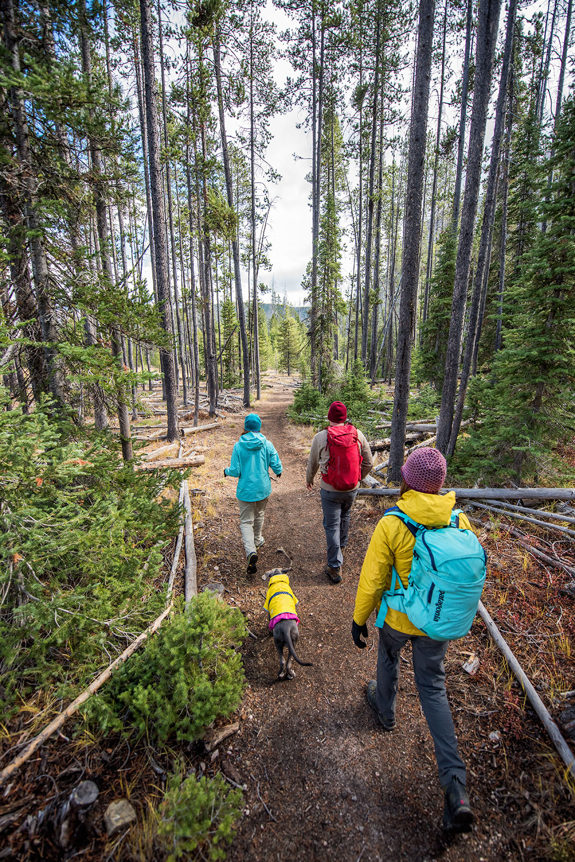 austin-trigg-patagonia-sawtooth-hiking-advenure-wilderness-forest-idaho-outside-lifestyle-day-fall-weather-mountains-trees-trail.jpg