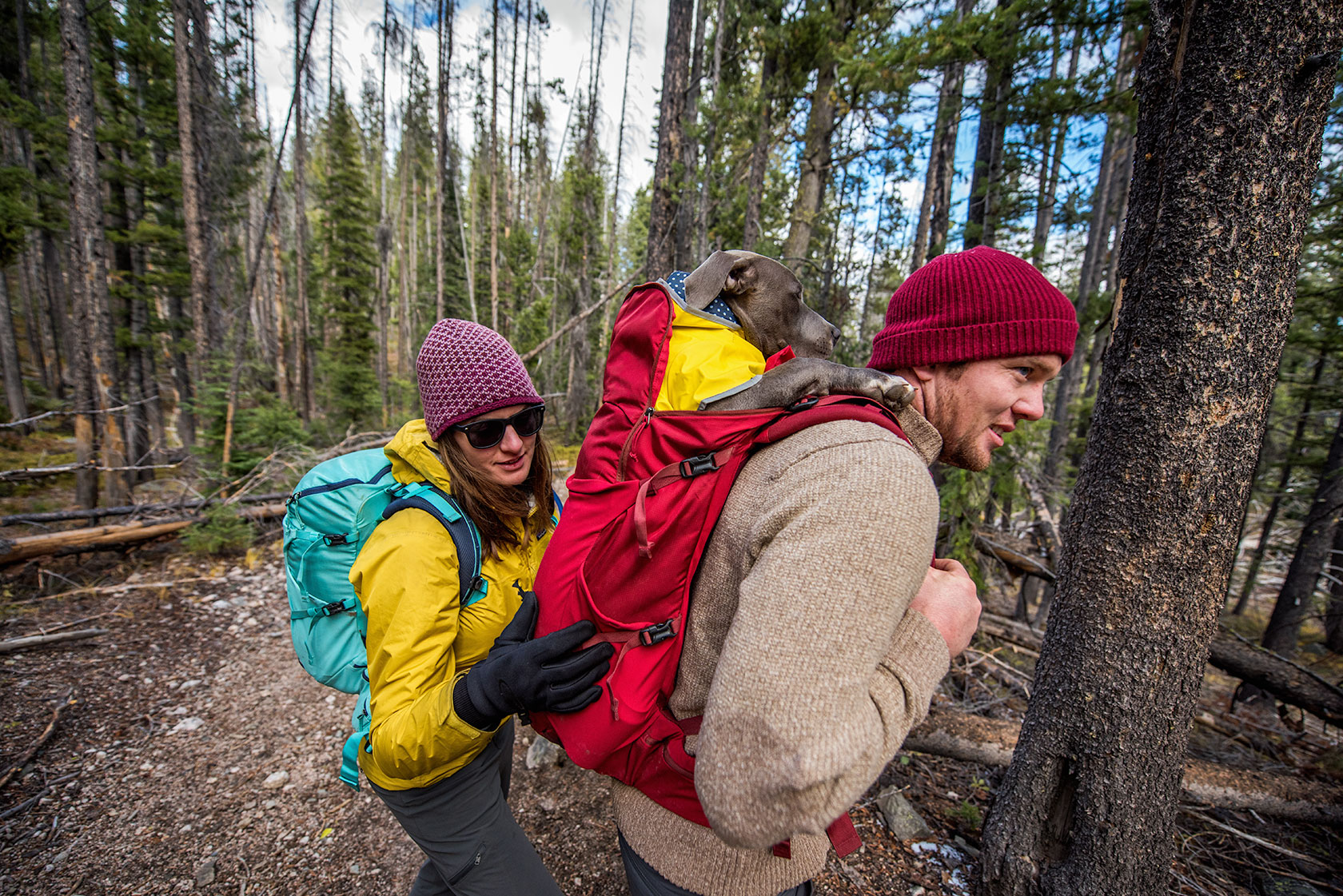 austin-trigg-patagonia-sawtooth-hiking-backpack-dog-advenure-wilderness-forest-idaho-outside-lifestyle-day-fall-weather-mountains-trees.jpg