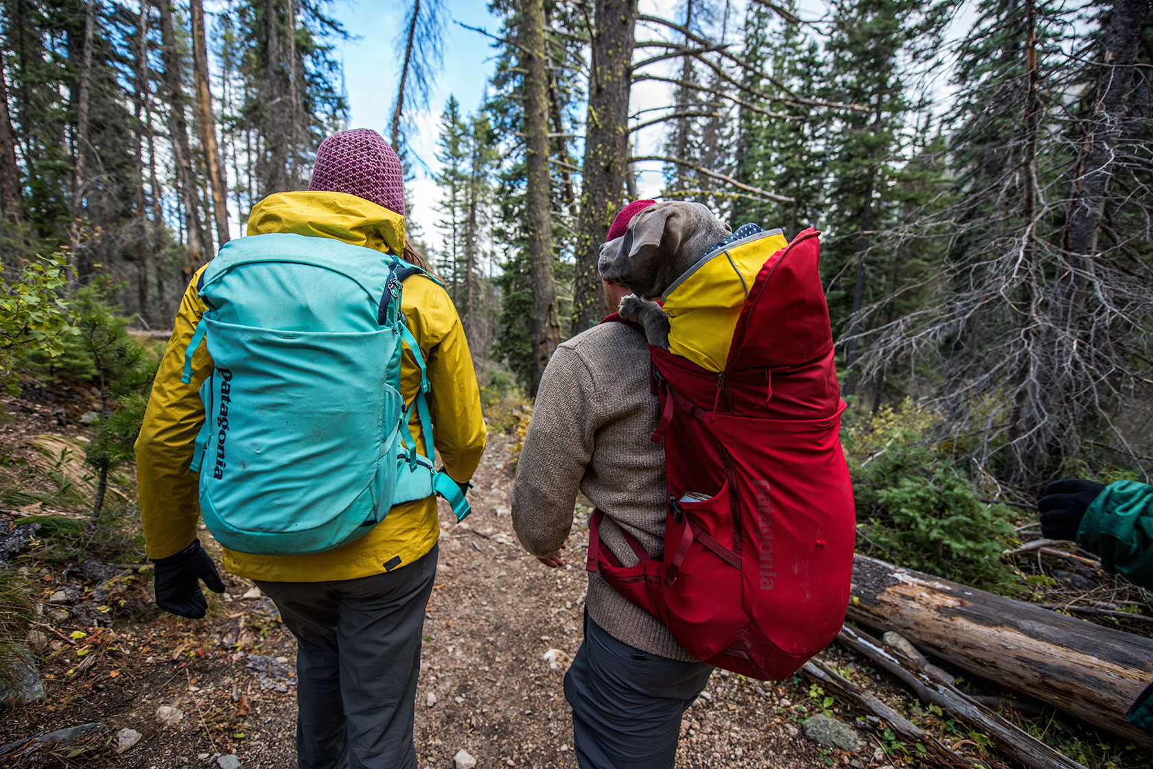 austin-trigg-patagonia-sawtooth-hiking-backpack-dog-advenure-wilderness-forest-idaho-outside-lifestyle-day-fall-weather-mountains.jpg